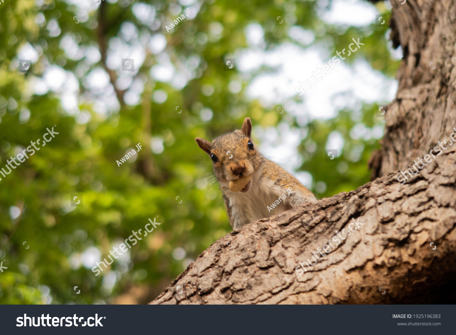 stock-photo-cute-squirrel-eating-an-almo