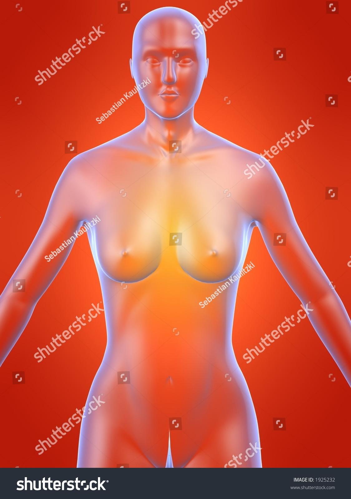 Female Anatomy Model Stock Illustration 1925232 Shutterstock