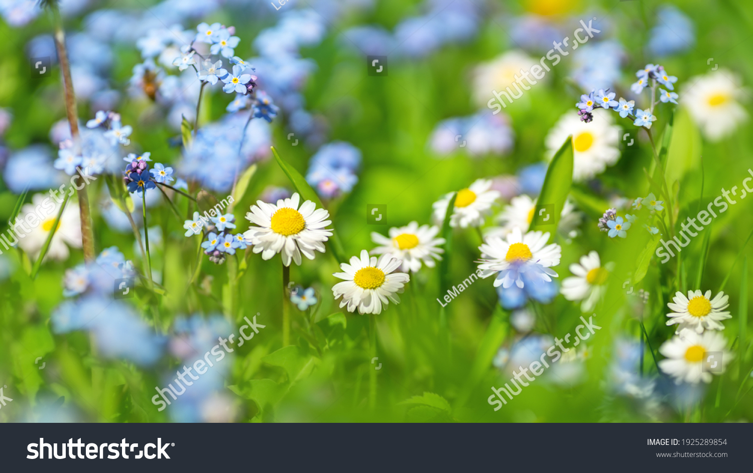 Meadow with lots of colorful spring flowers on sunny day. Nature floral background in early summer with fresh green grass. #1925289854