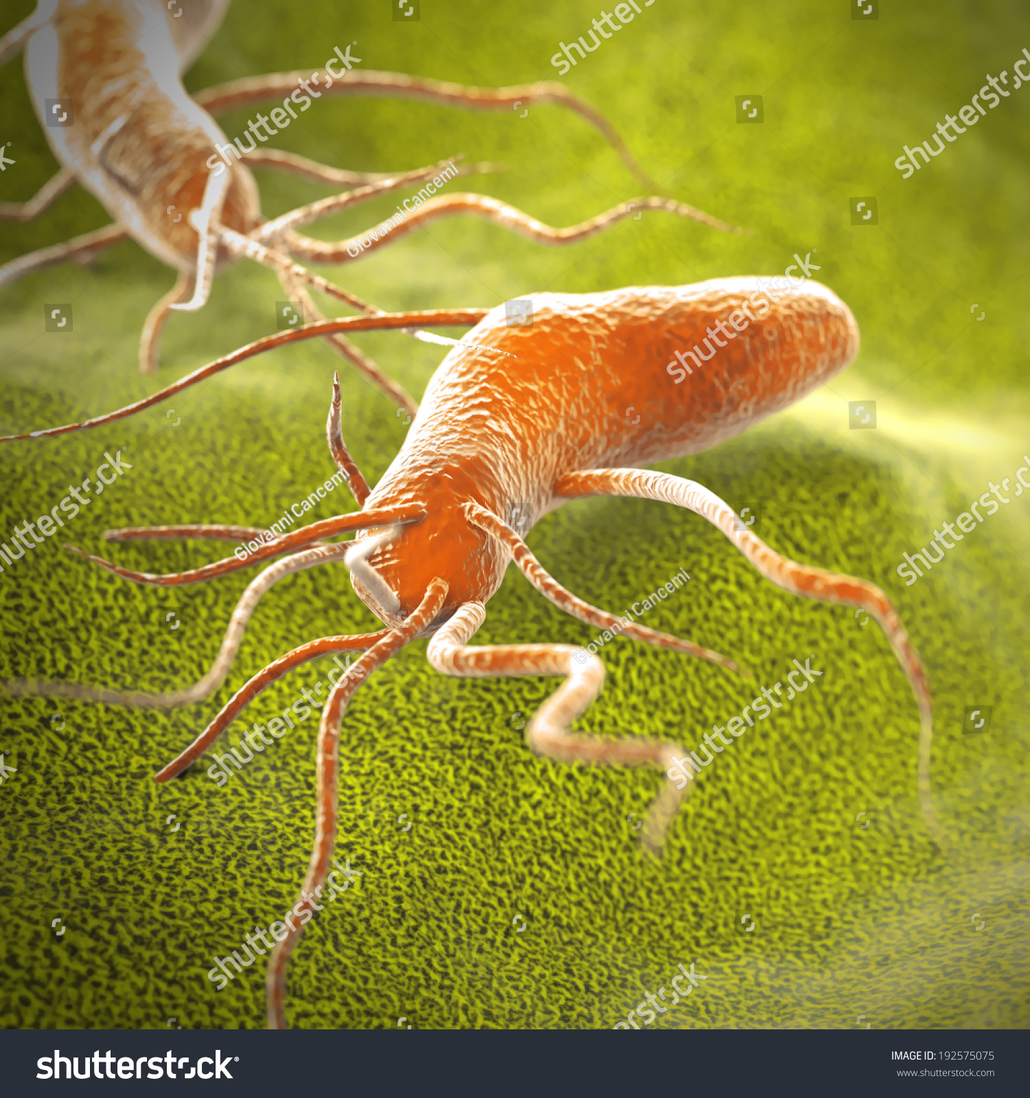 Top Salmonella Cell Intestinal Images For Pinterest Tattoos