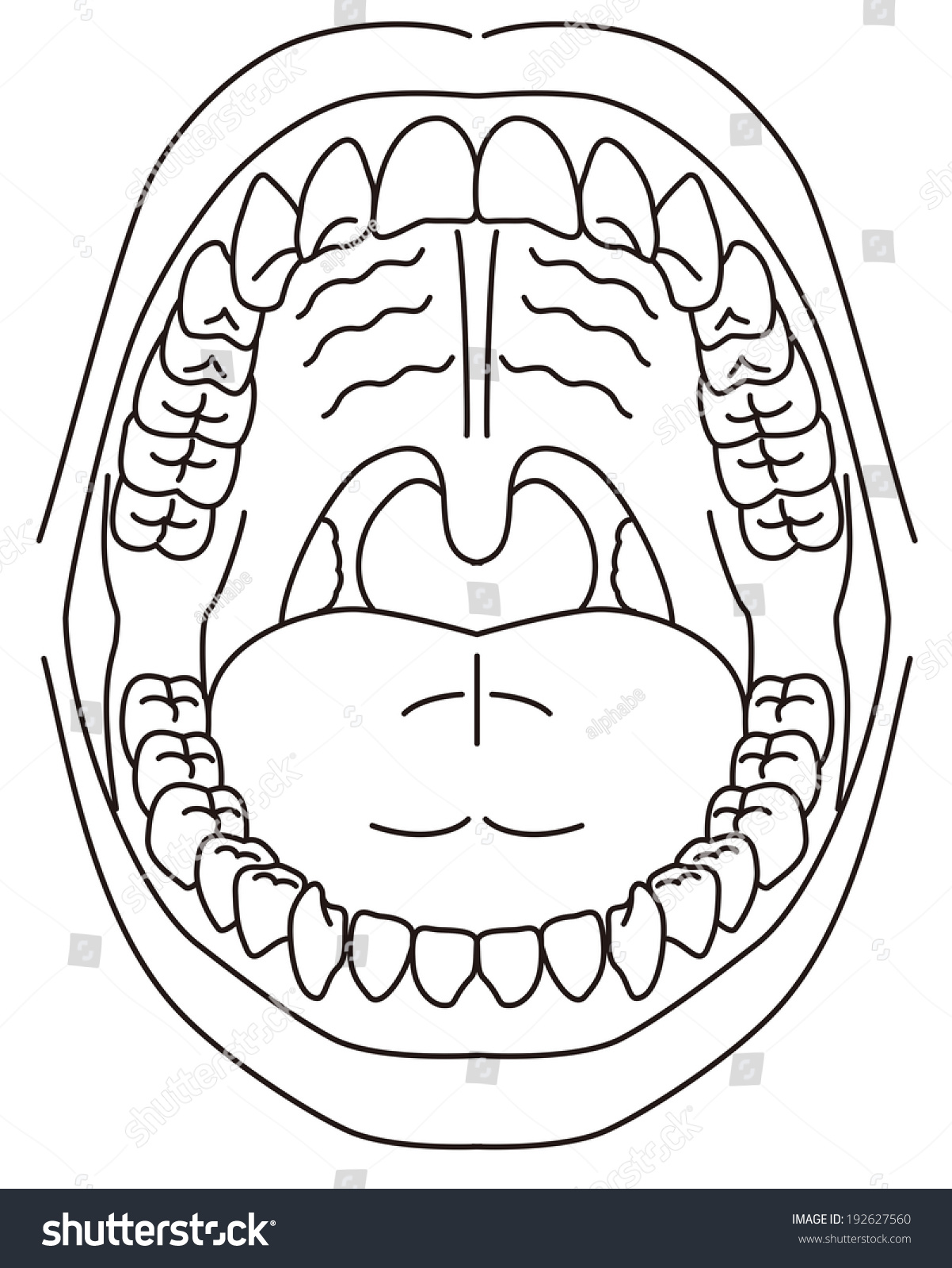 stock vector schematic diagram of the oral cavity 192627560 schematic diagram oral cavity stock vector (royalty free) 192627560
