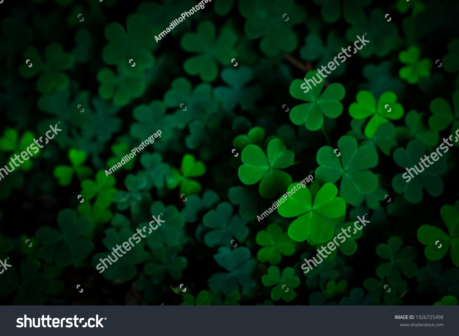 Small green Clover leaves pattern background, Natural and St. Patrick's day background and shamrock wallpaper. vacation and holiday clovers symbol,Spring concept. #1926725498