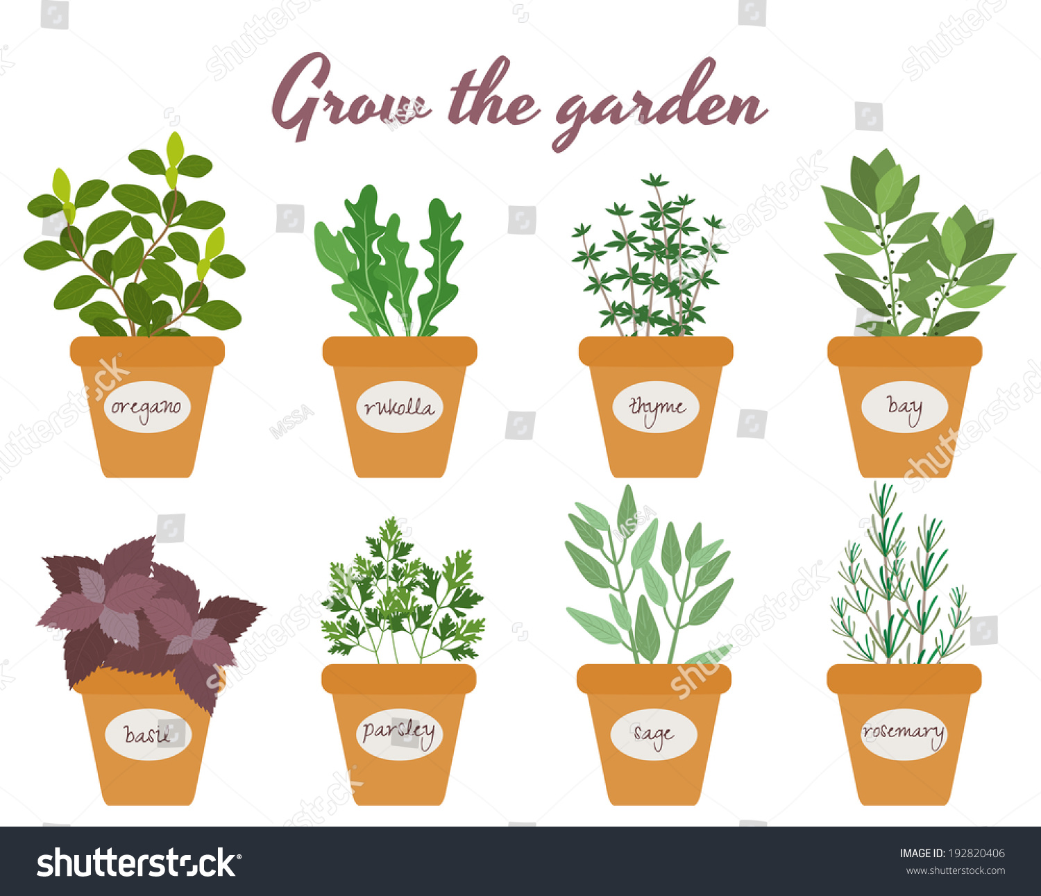 Parsley Illustration Set Vector Culinary He...