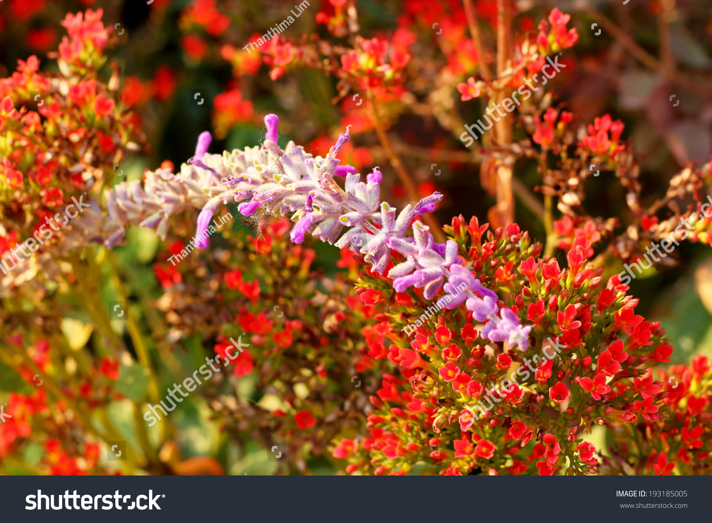 Beautiful flowers nature stock photo edit now 193185005 shutterstock beautiful flowers in nature izmirmasajfo