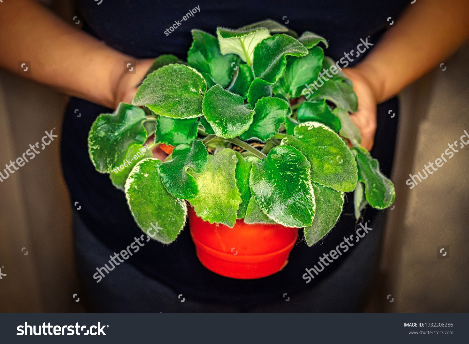 stock-photo-potted-violet-in-the-hands-o
