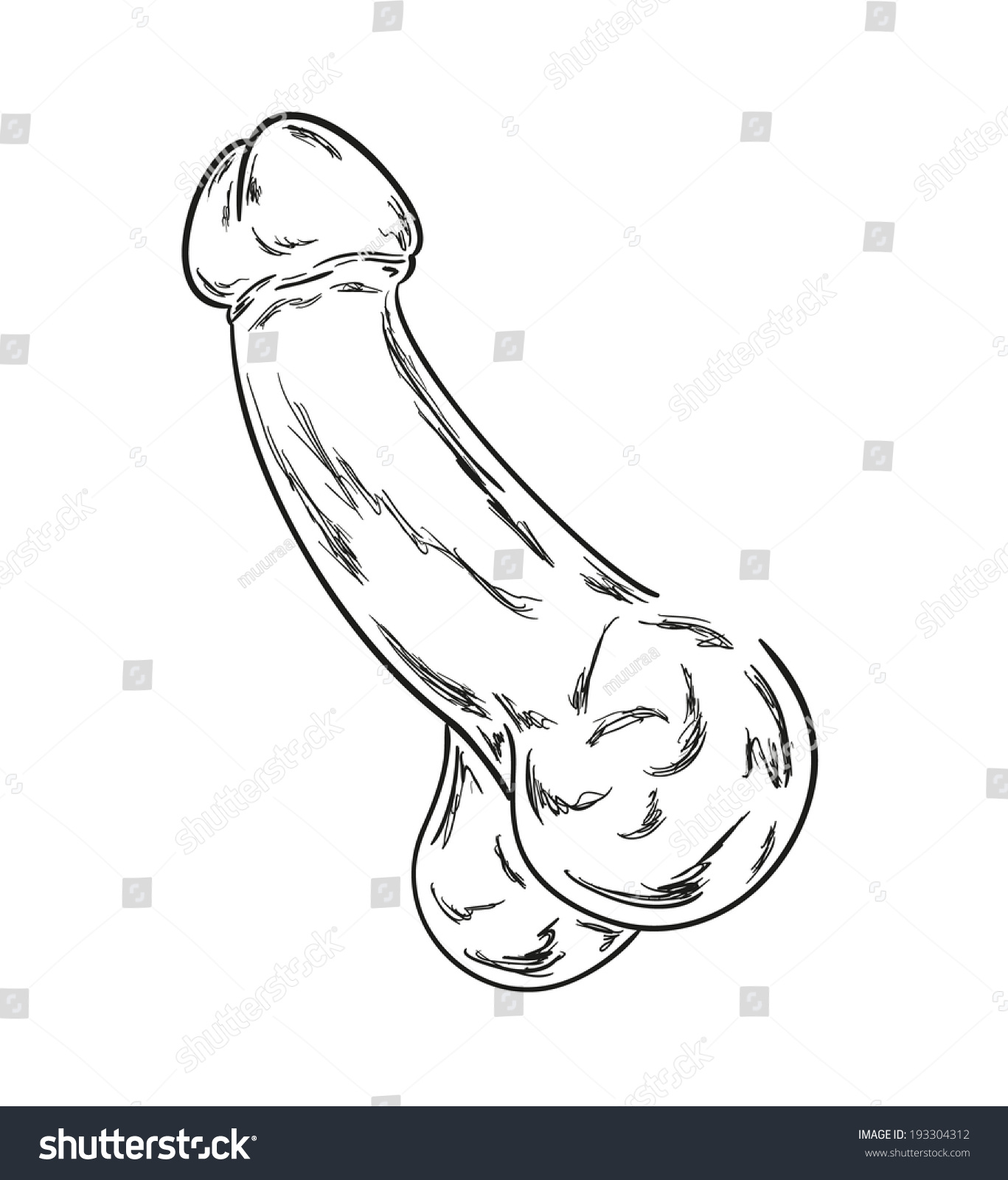 Drawing Of A Penis 87