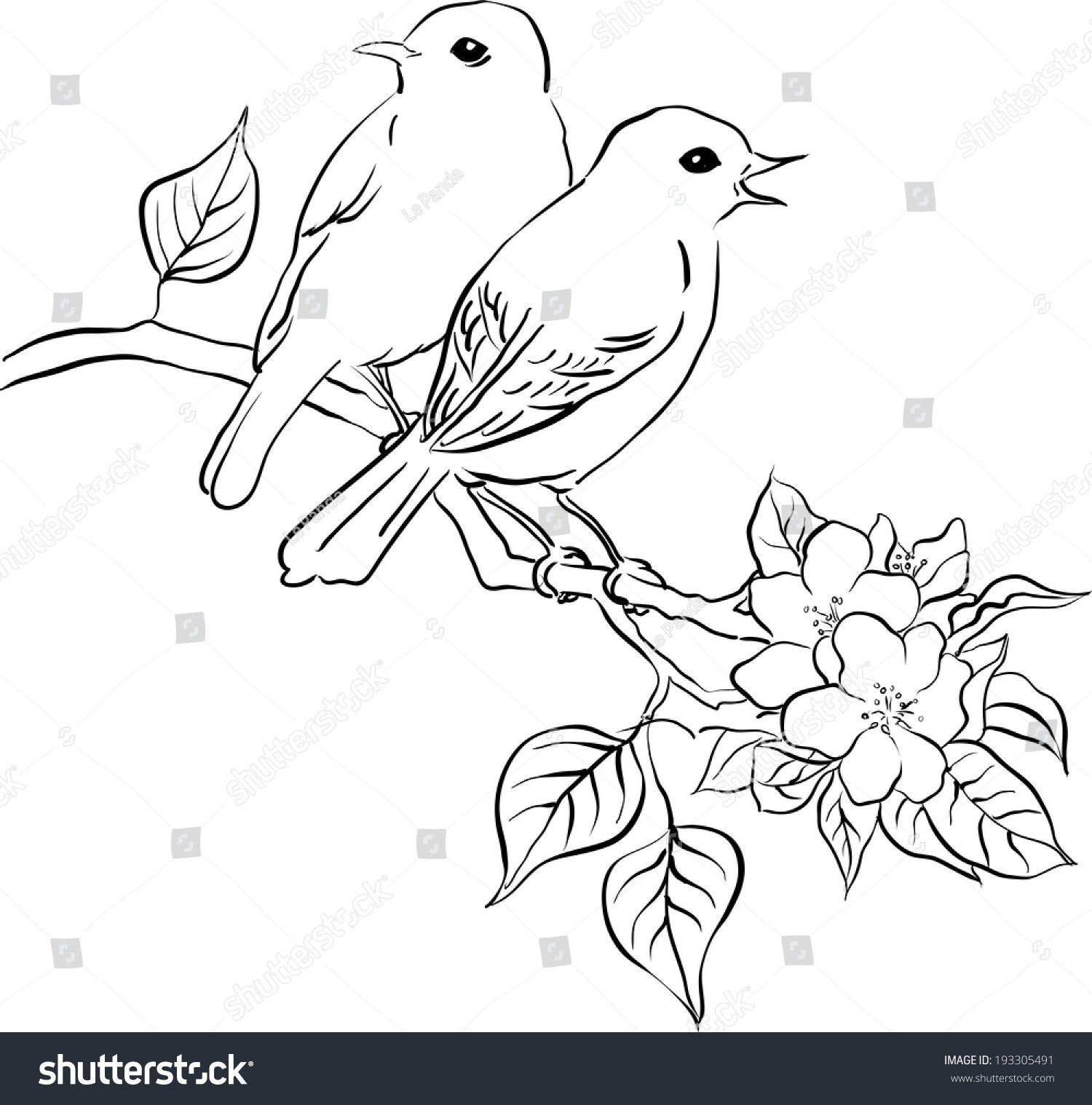 Line Drawing Spring Flowers : Two song birds on spring blossom stock vector