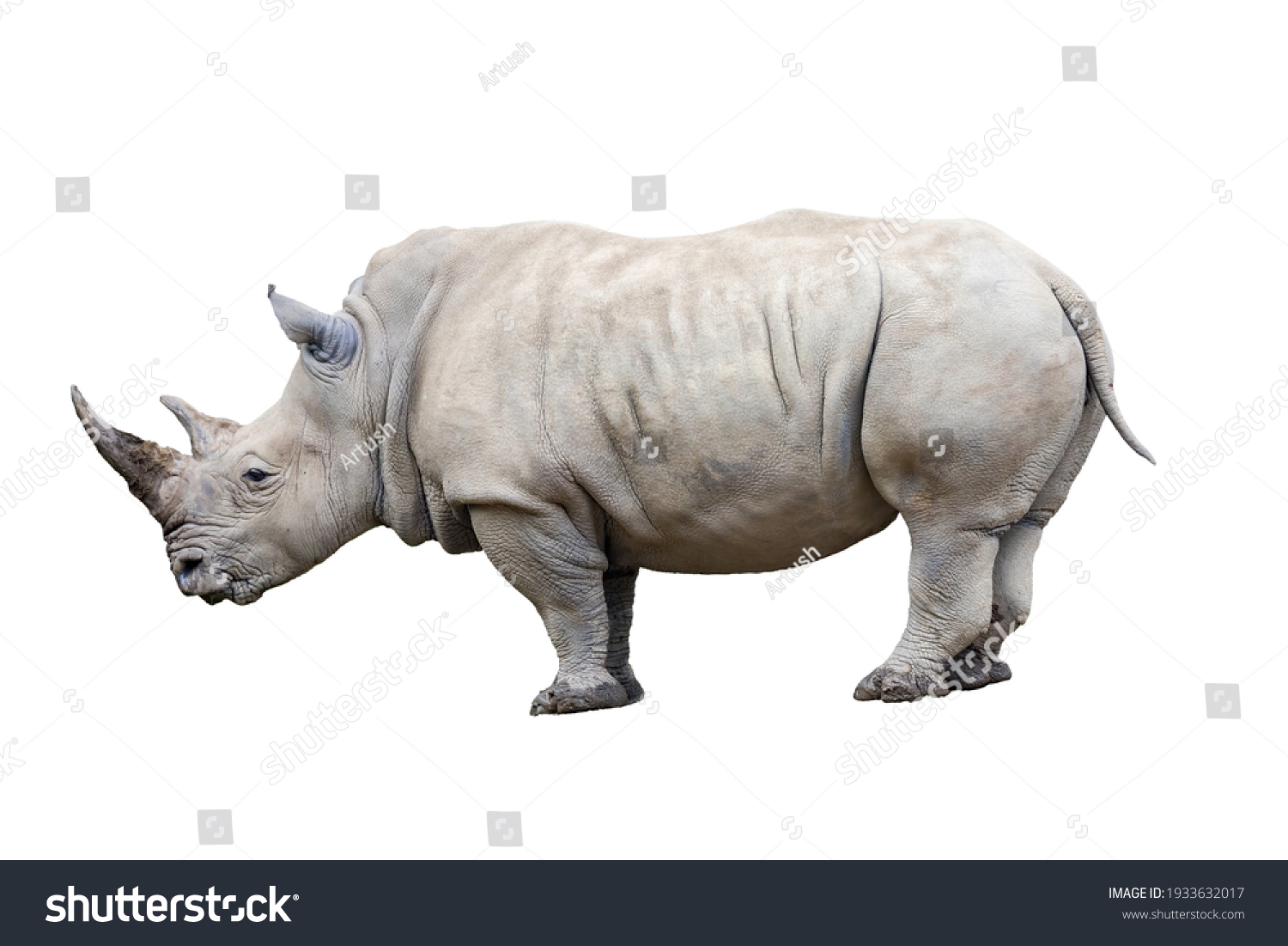 Rhino rhinoceros standing side view isolated on white background. #1933632017