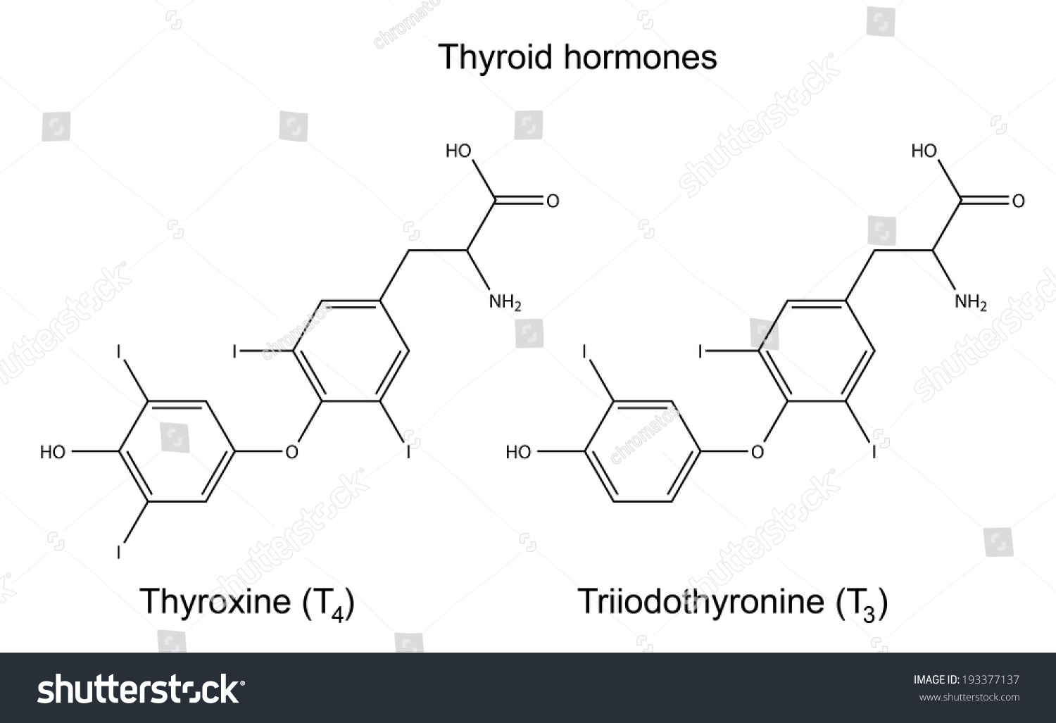 Structural Chemical Formulas Thyroid Hormones Thyroxine Stock