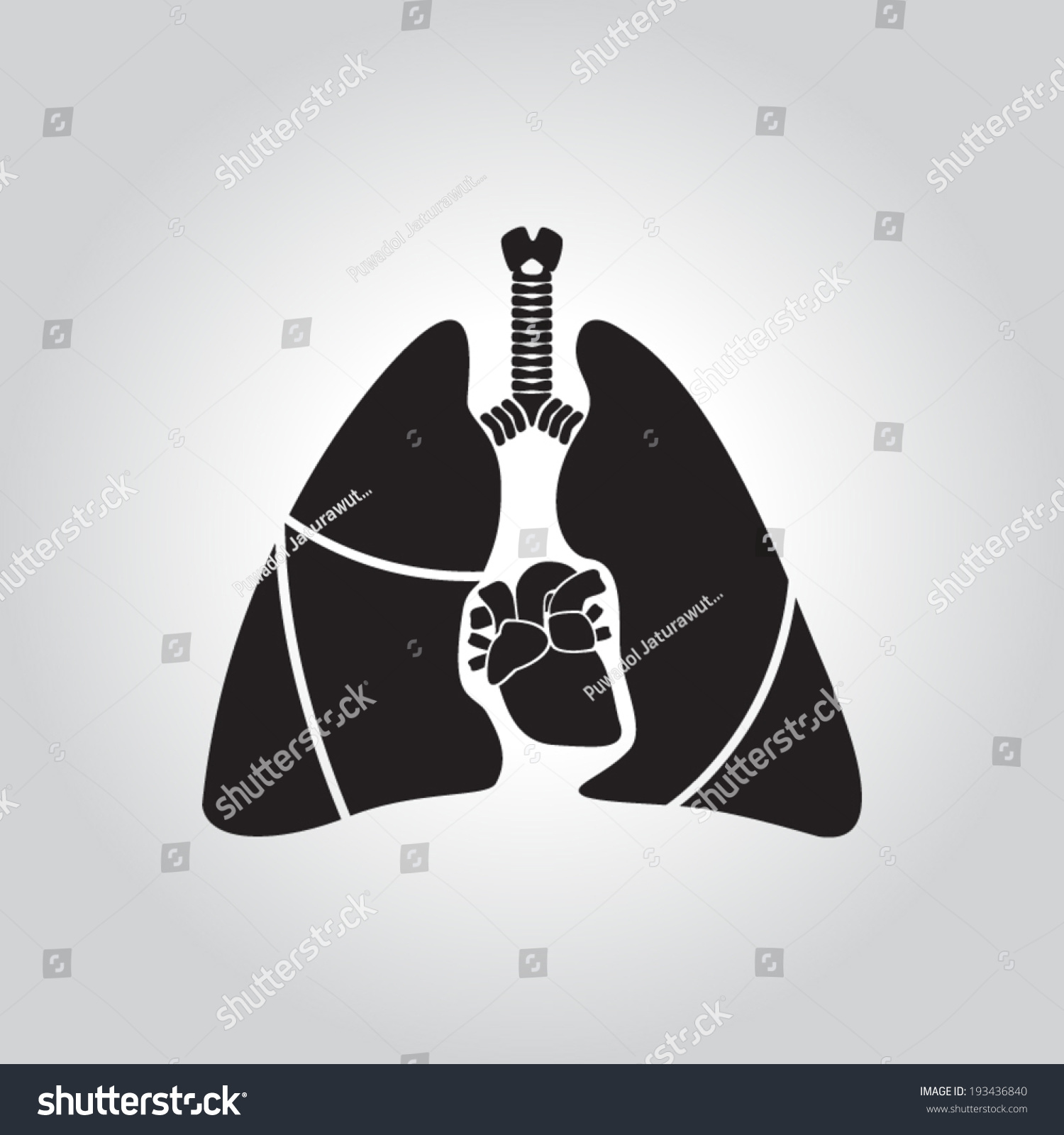 Heart Lung Anatomy Stock Vector 193436840 - Shutterstock