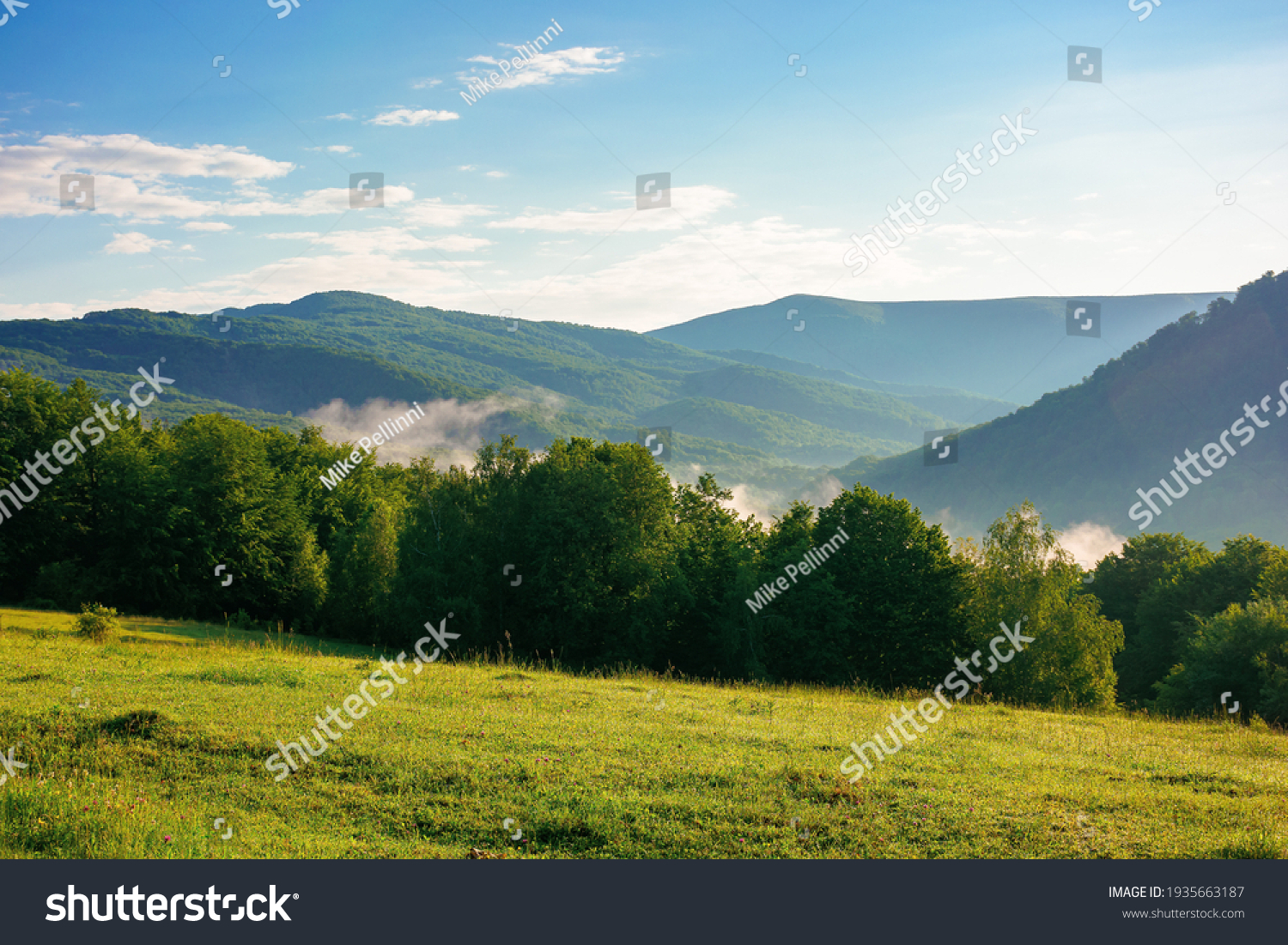 mountain meadow in morning light. countryside springtime landscape with valley in fog behind the forest on the grassy hill. fluffy clouds on a bright blue sky. nature freshness concept #1935663187