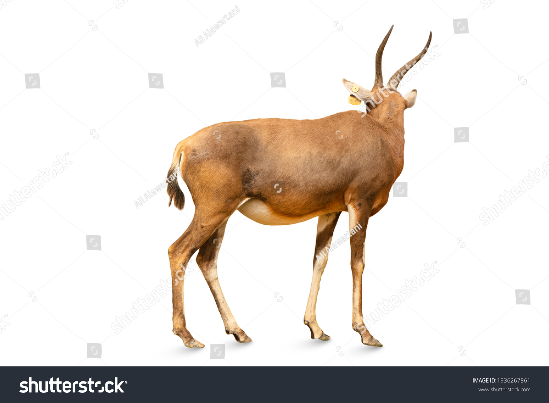 stock-photo-closeup-to-a-kudu-bull-or-an