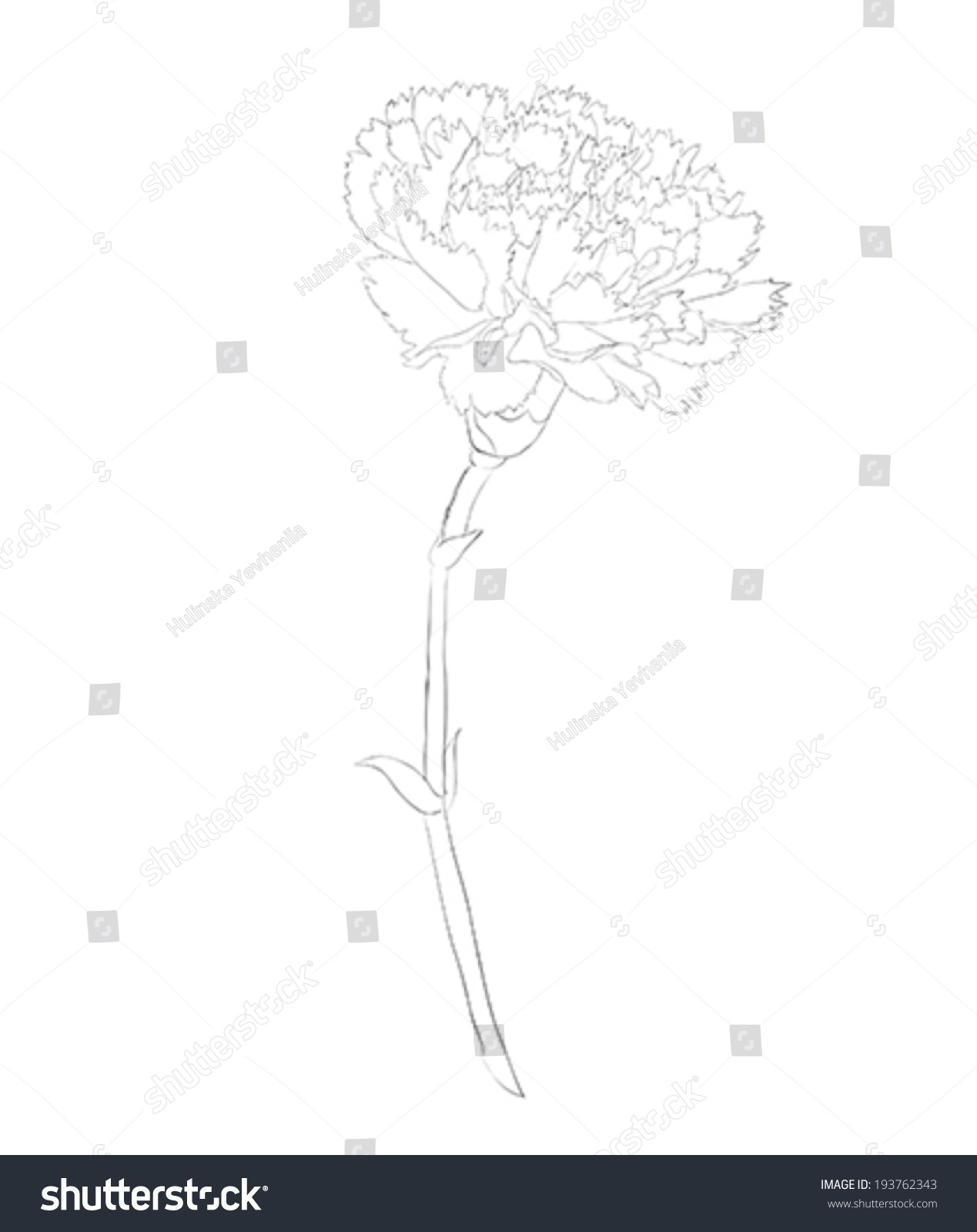 carnation floral diagram wiring diagram online Water Lily Anatomy beautiful monochrome black white carnation flower stock vector carnation clip art carnation floral diagram
