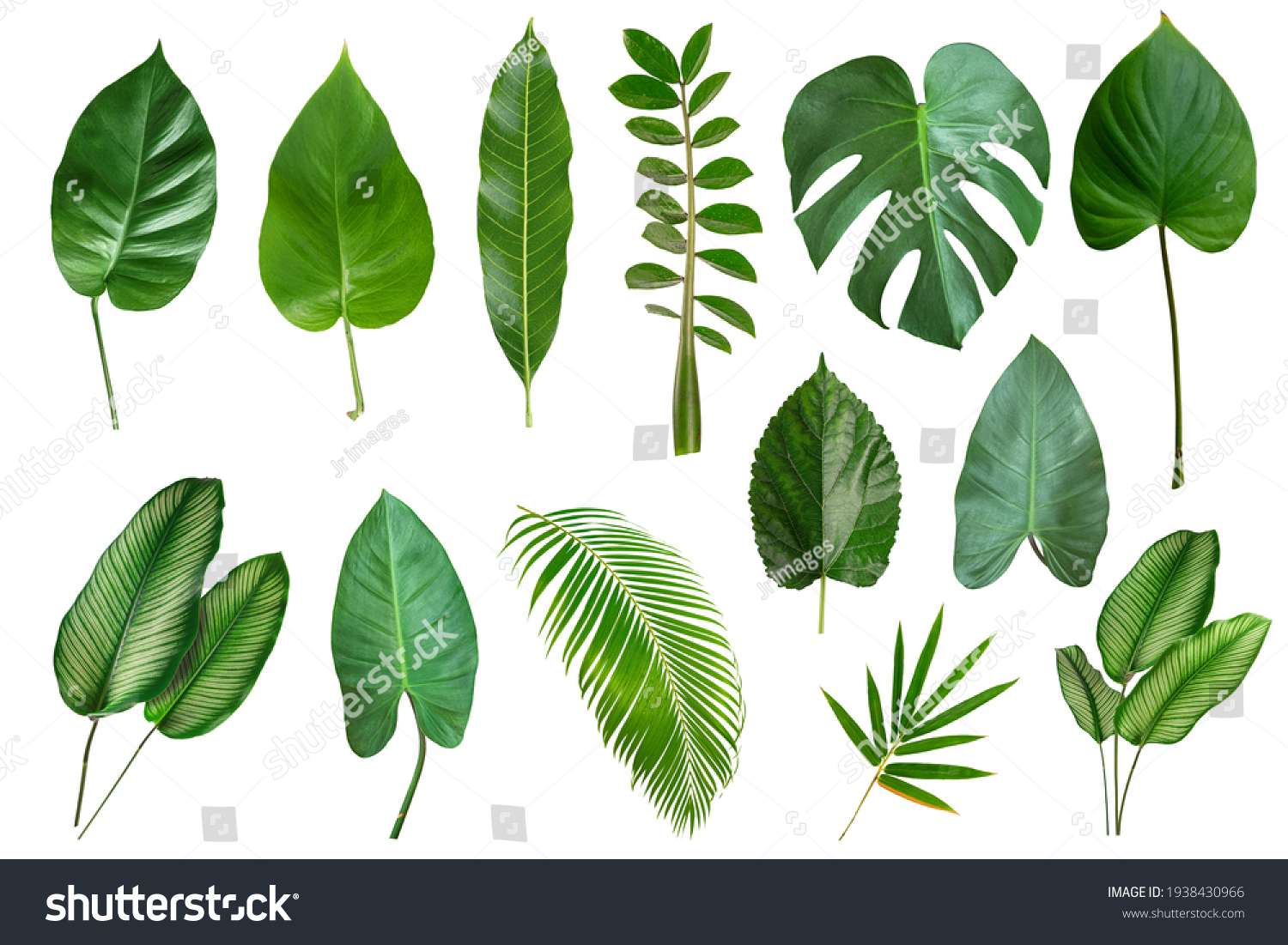 Set of Tropical leaves isolated on white background. Beautiful    tropical exotic foliage #1938430966