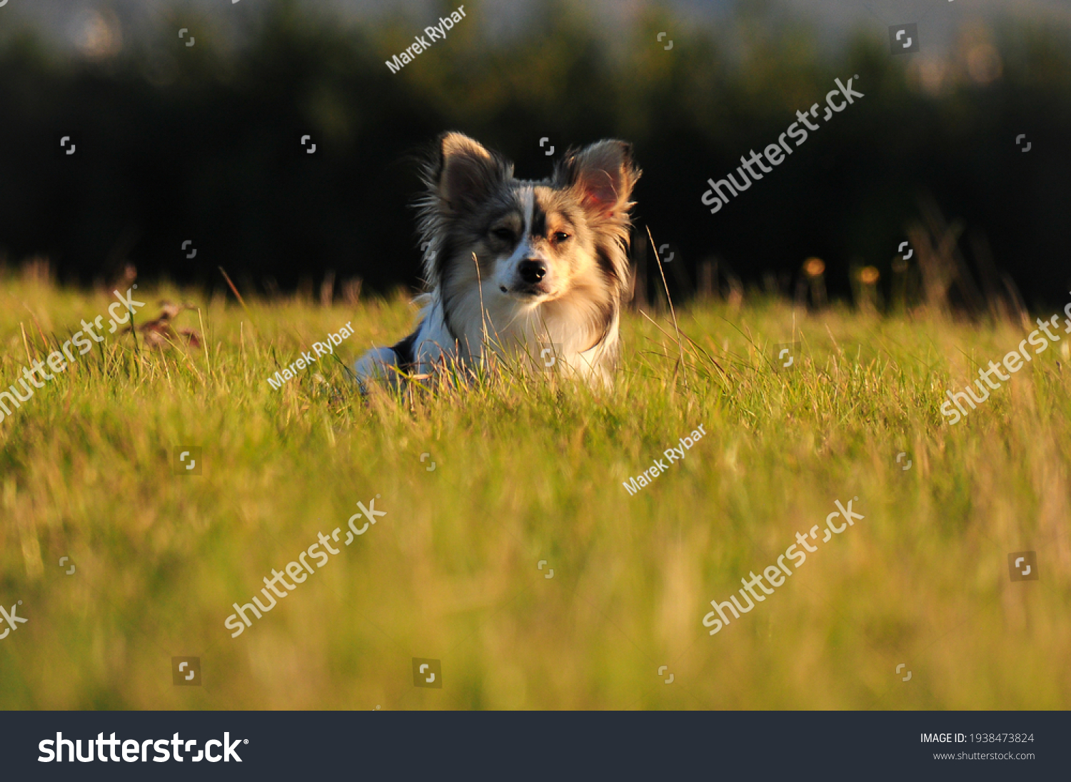 stock-photo-young-dog-in-the-field-with-