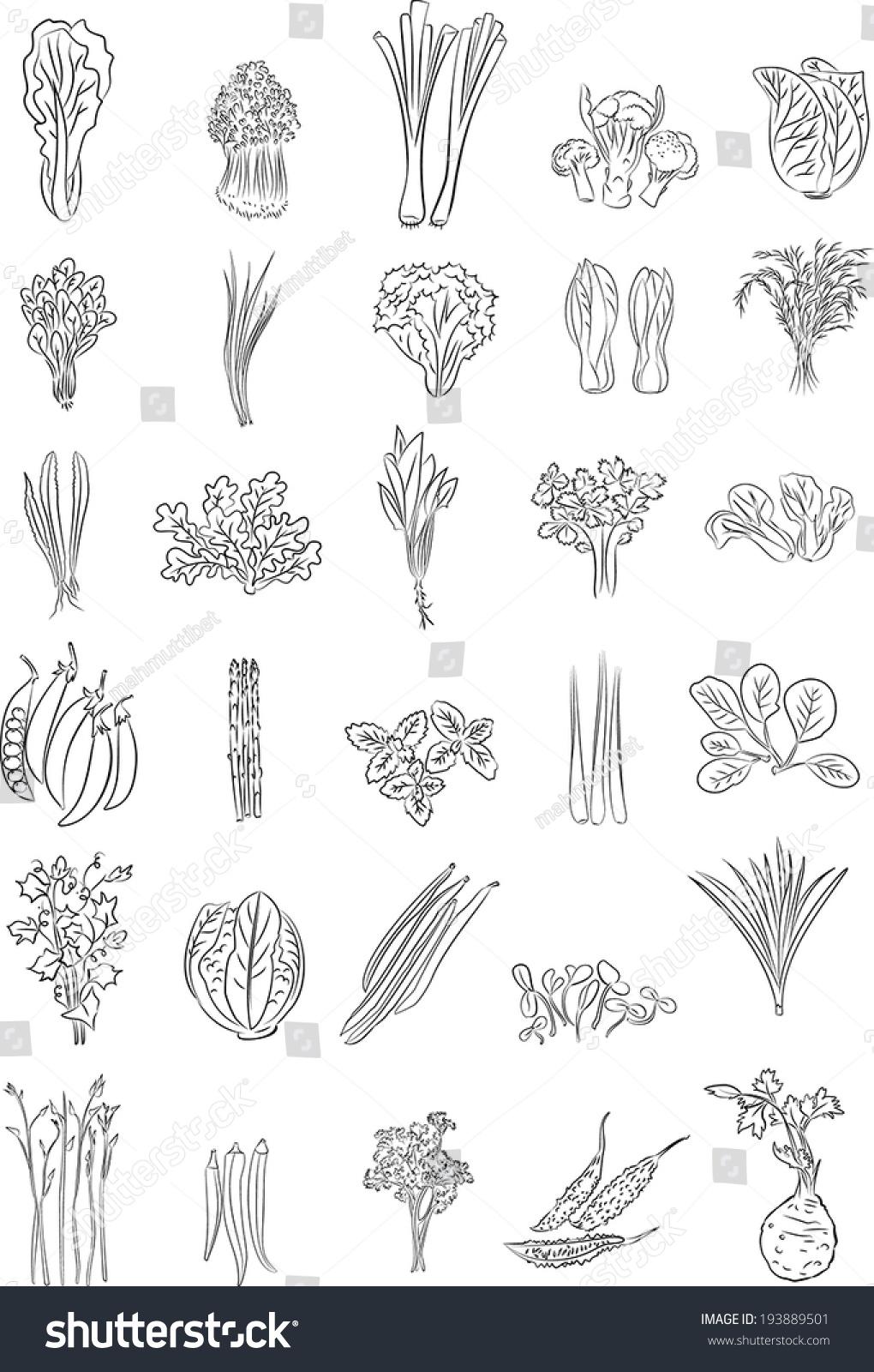 Line Art Vegetables : Vector illustration green vegetables line art stock