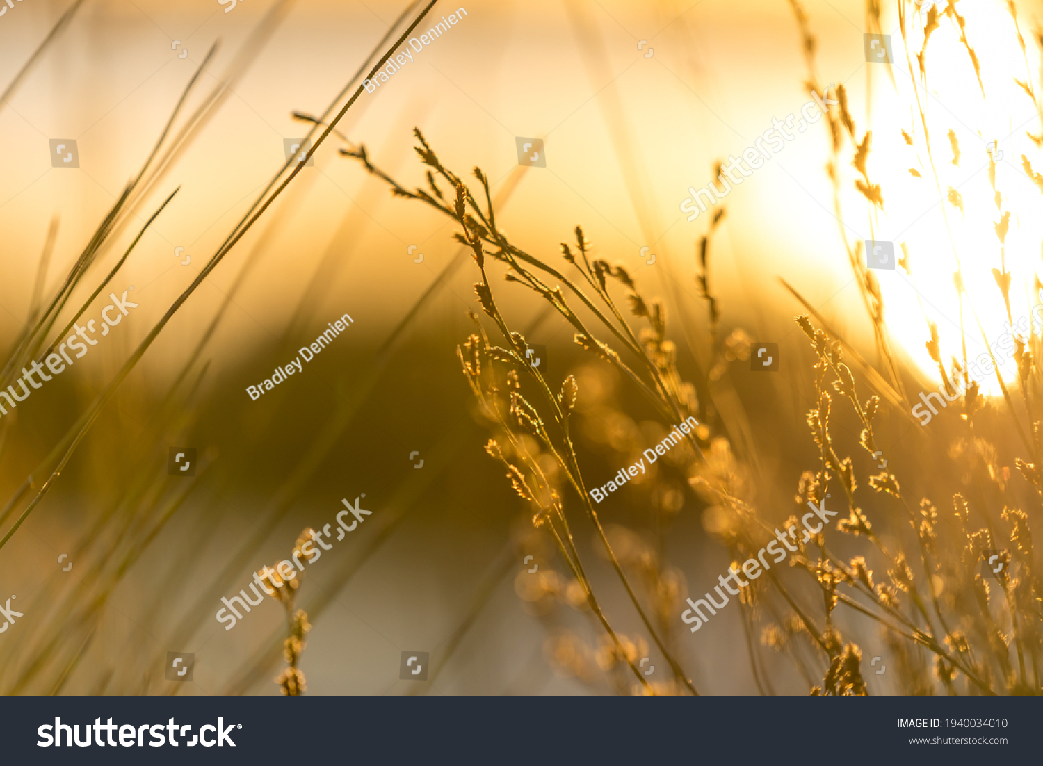 Serene and heavenly golden light cascading across reeds by a beautifully lit lake #1940034010