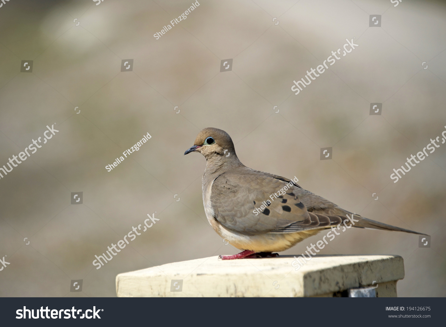 2 doves symbolism image collections symbol and sign ideas 2 doves symbolism gallery symbol and sign ideas mourning doves symbolism image collections symbol and sign buycottarizona