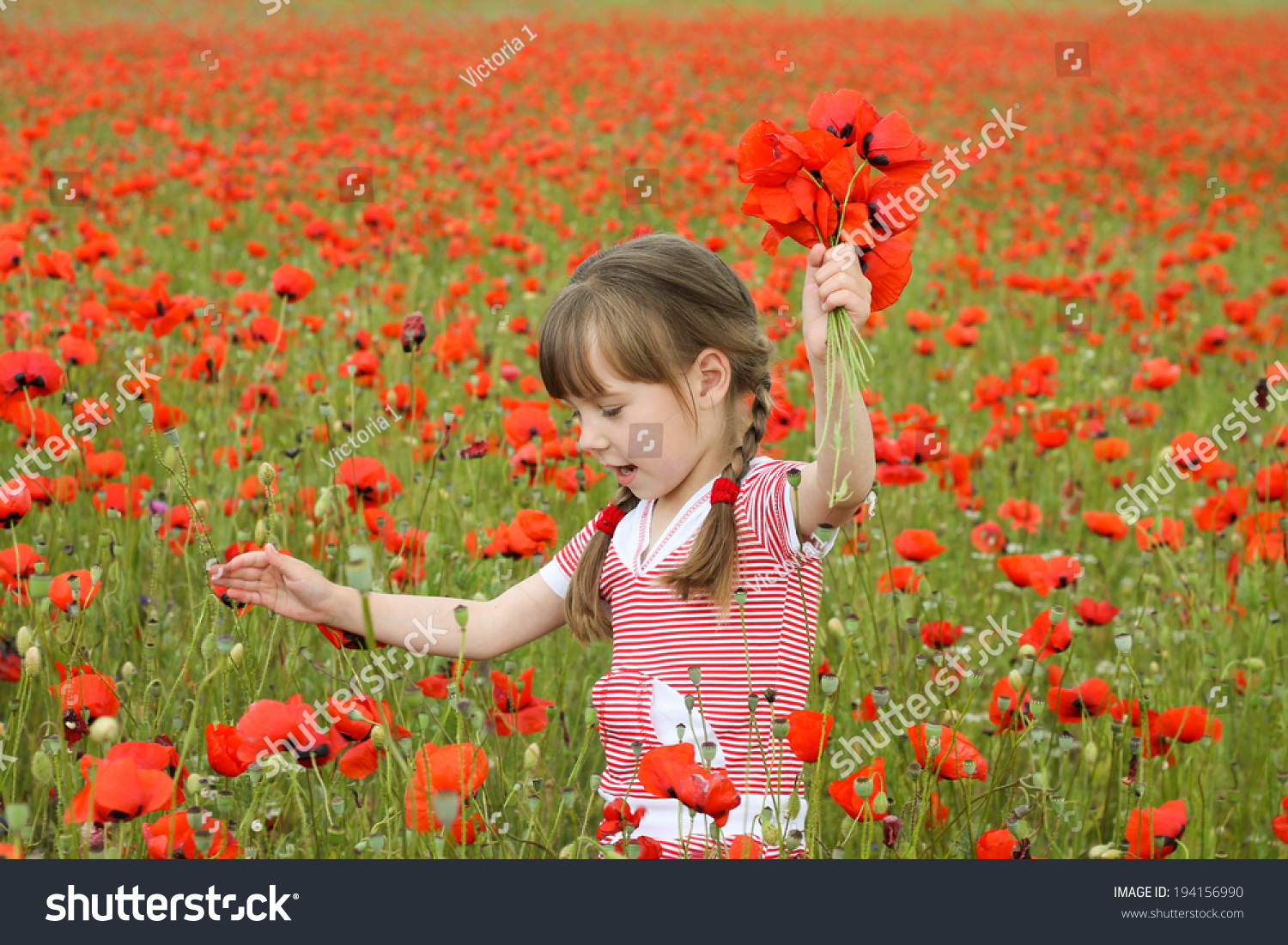Girl Collects Poppy Flowers Stock Photo Edit Now 194156990