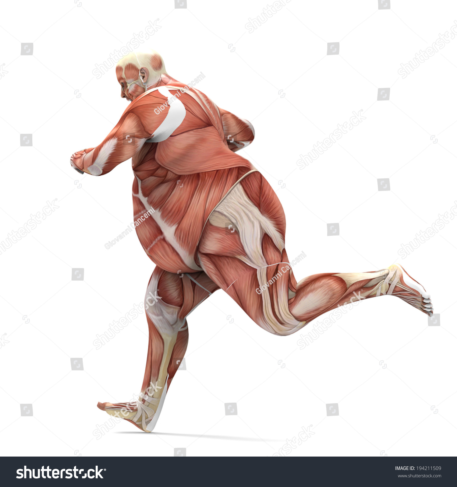 Woman anatomy diagram