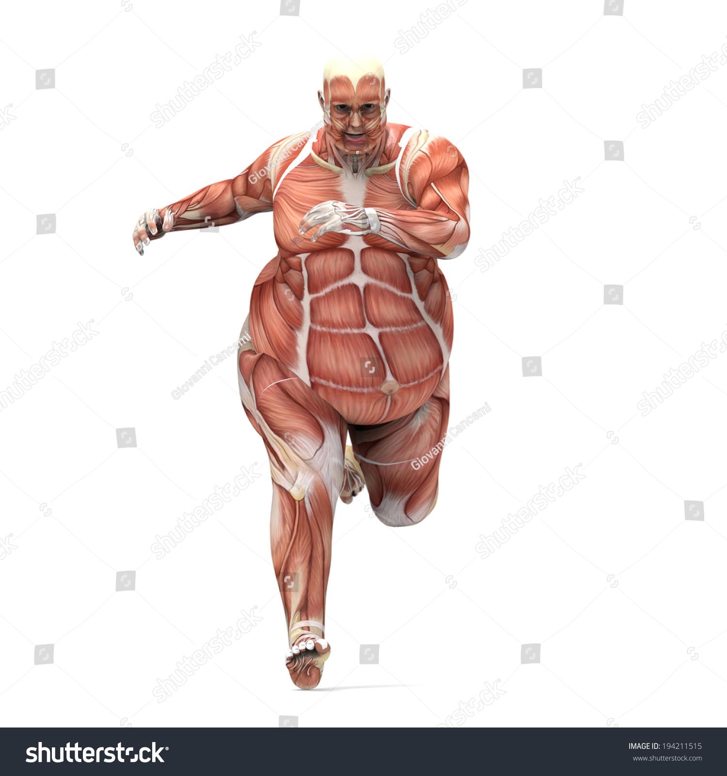 Anatomy Obese Man Running Stock Illustration 194211515 - Shutterstock