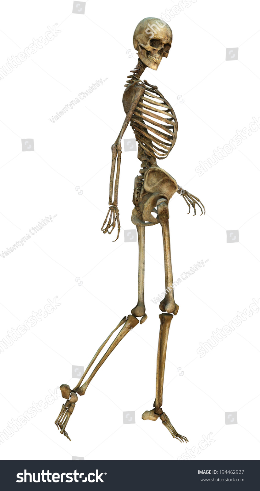 3d digital render old walking human stock illustration 194462927, Skeleton