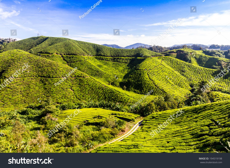 Cameron Highlands, Tea Plantation, Malaysia Stock Photo ...