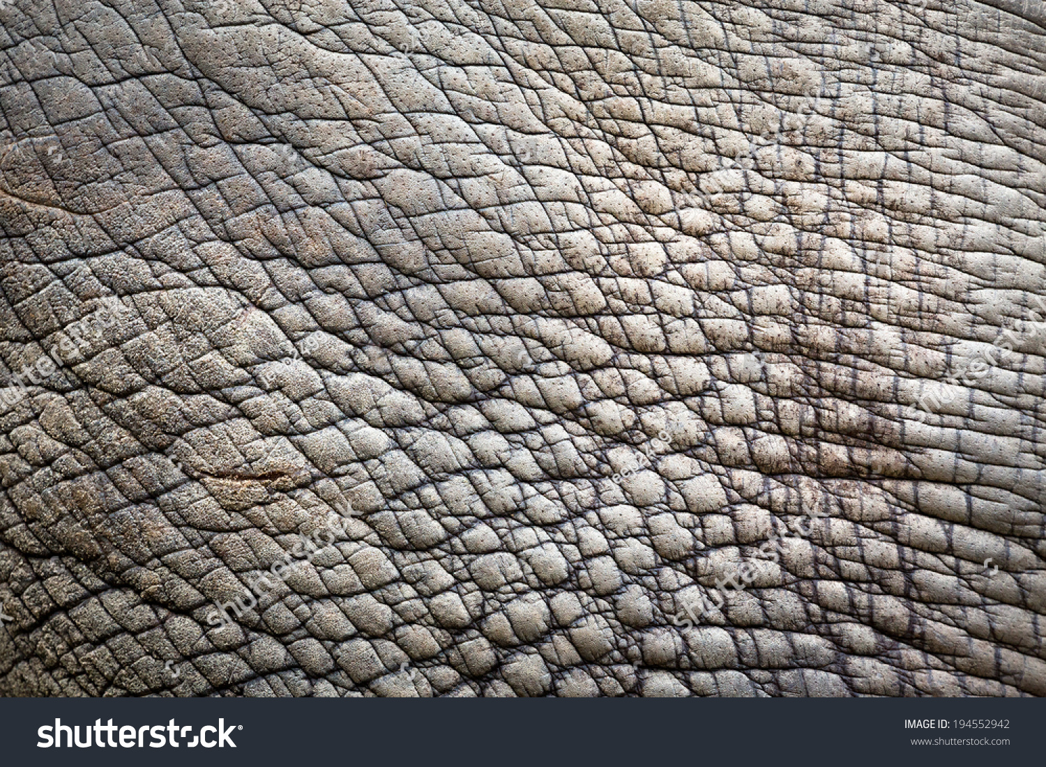 Rhino (White Rhinoceros) Skin Texture. Stock Photo ...