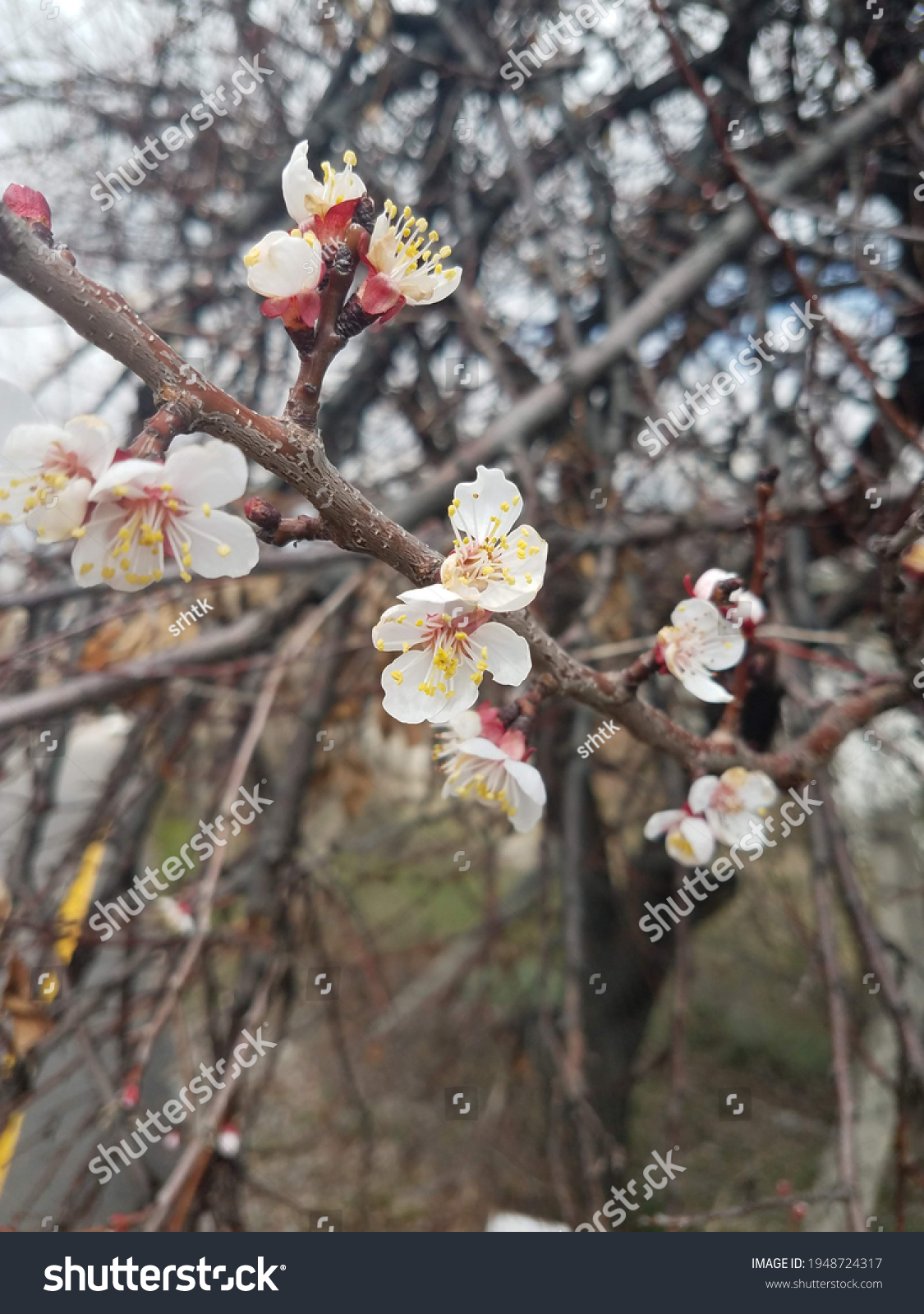 stock-photo-first-signs-of-spring-with-a