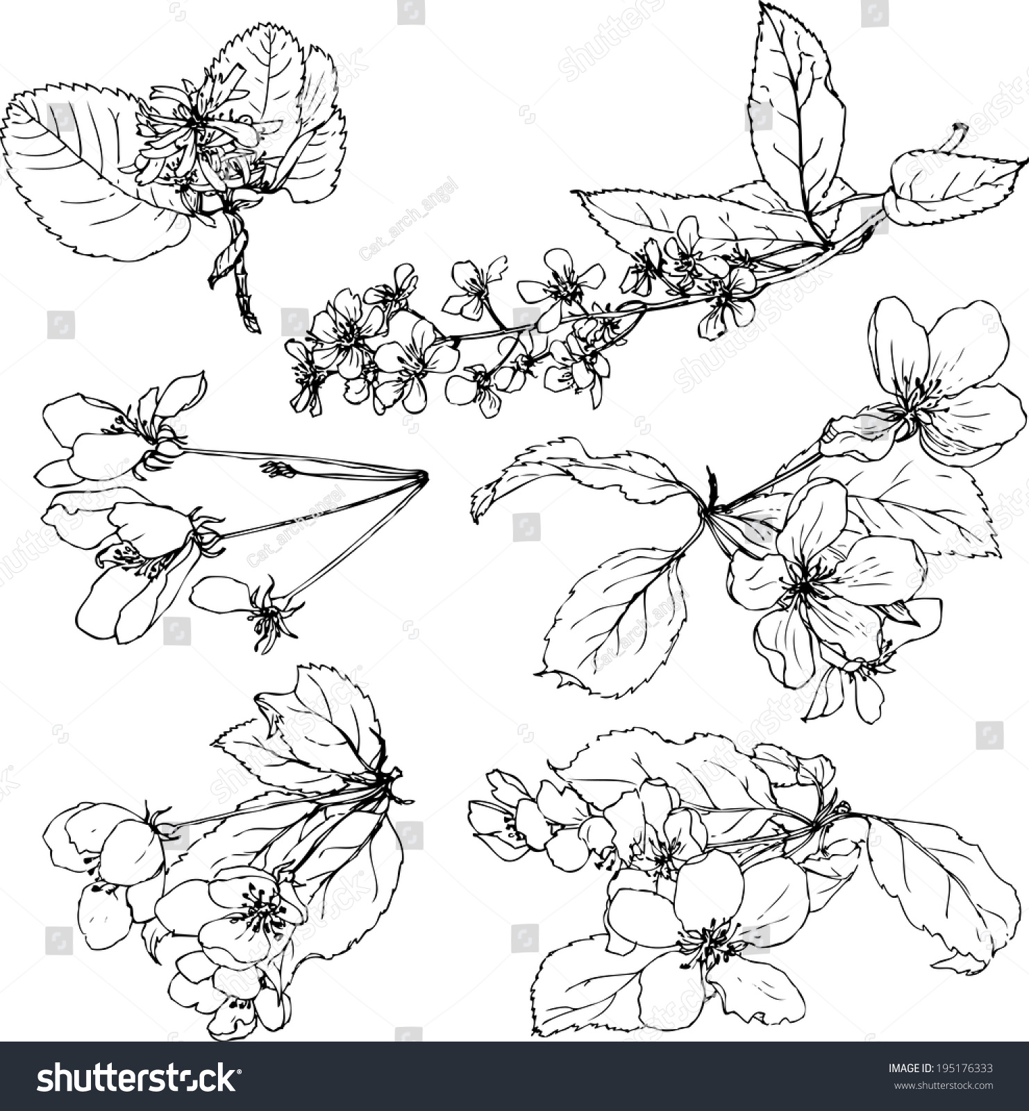 Blossom Flower Line Drawing : Set line drawing flowers treesapple blossoms vectores en