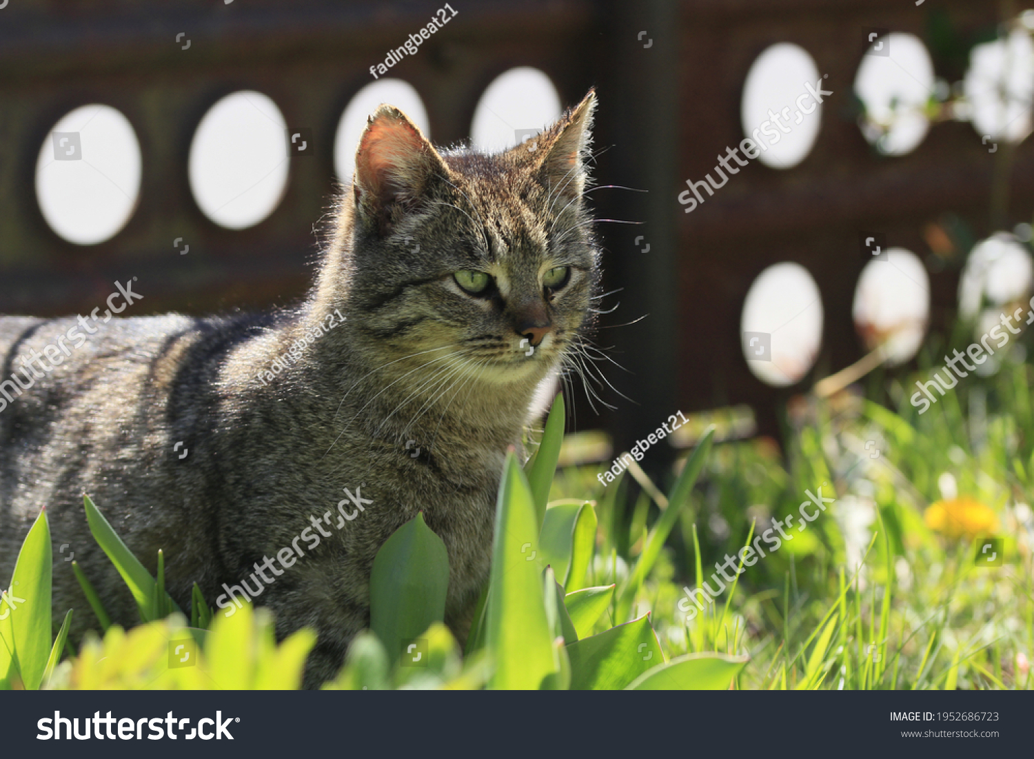 stock-photo-front-of-the-cat-s-head-in-t