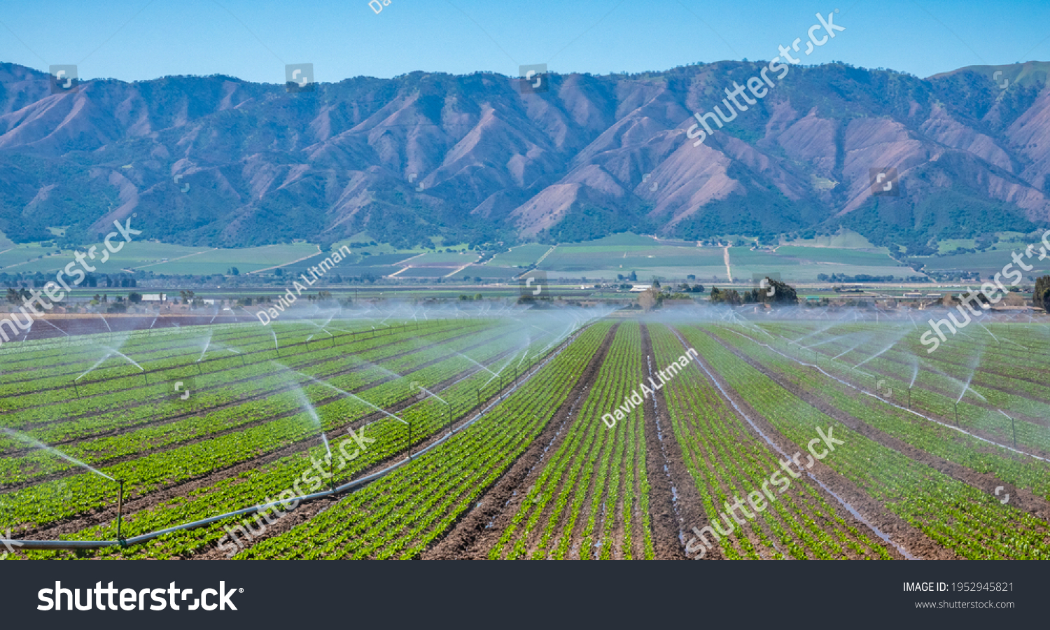 A field irrigation sprinkler system waters rows of lettuce crops on farmland in the Salinas Valley of central California, in Monterey County.