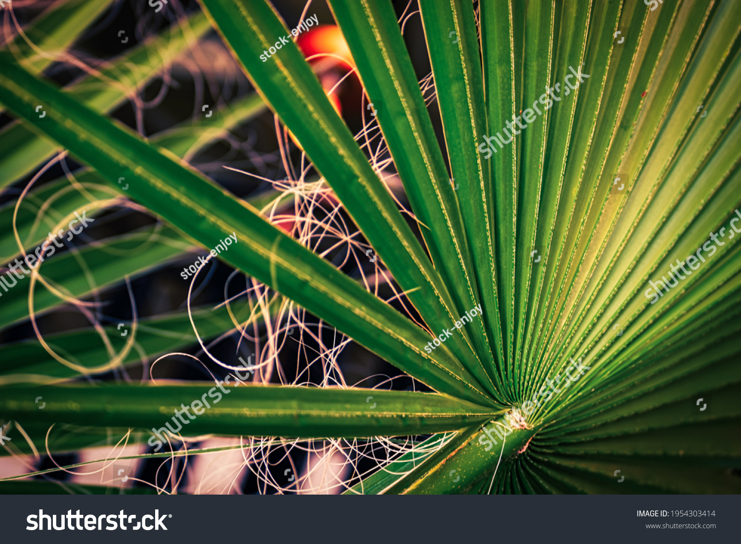 Leaves of decorative palm tree green background inside the room selective focus.