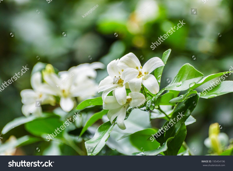 Thai flowers ez canvas mightylinksfo