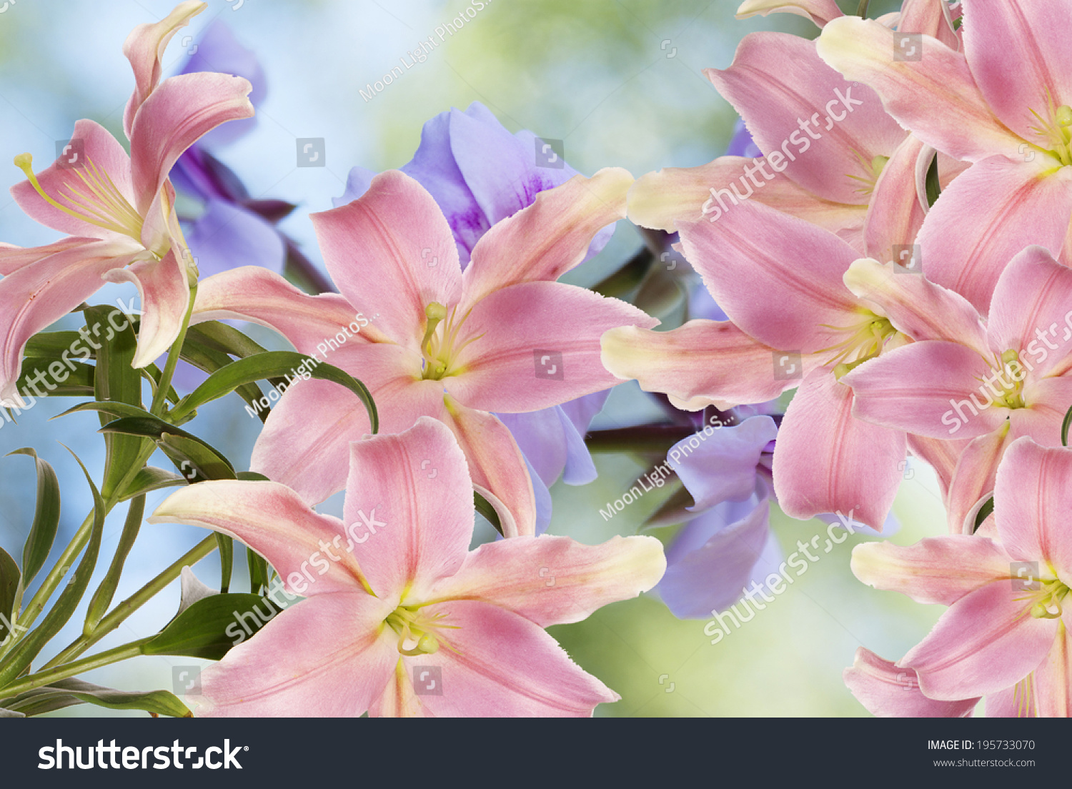 Lily Flower As Background For Your Design Ez Canvas