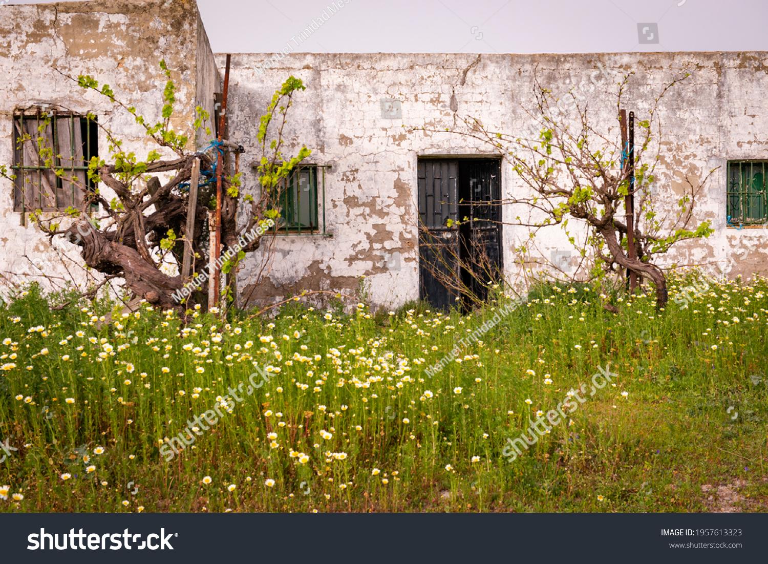 Abandoned country house with open door