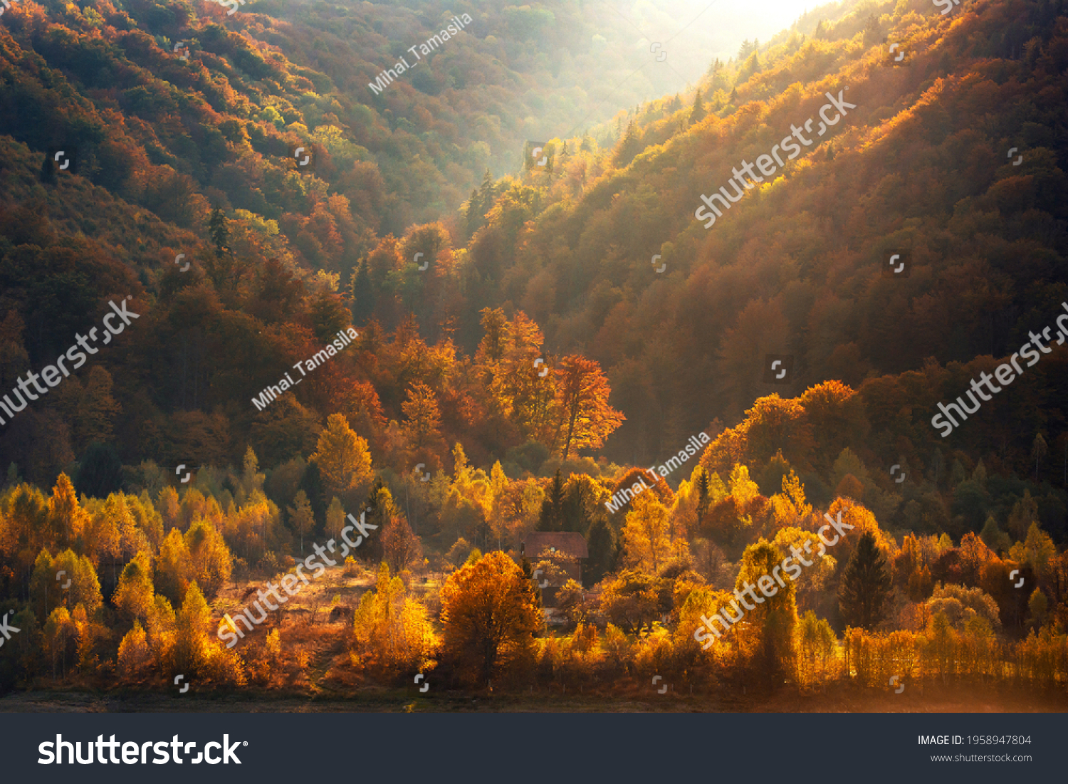 stock-photo-aerial-view-of-forest-at-sun