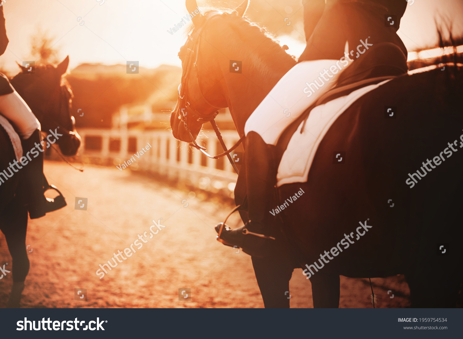 Two bay horses with riders in their saddles walk around the farm during the sunset, illuminated by the rays of the sun. Horse riding. #1959754534