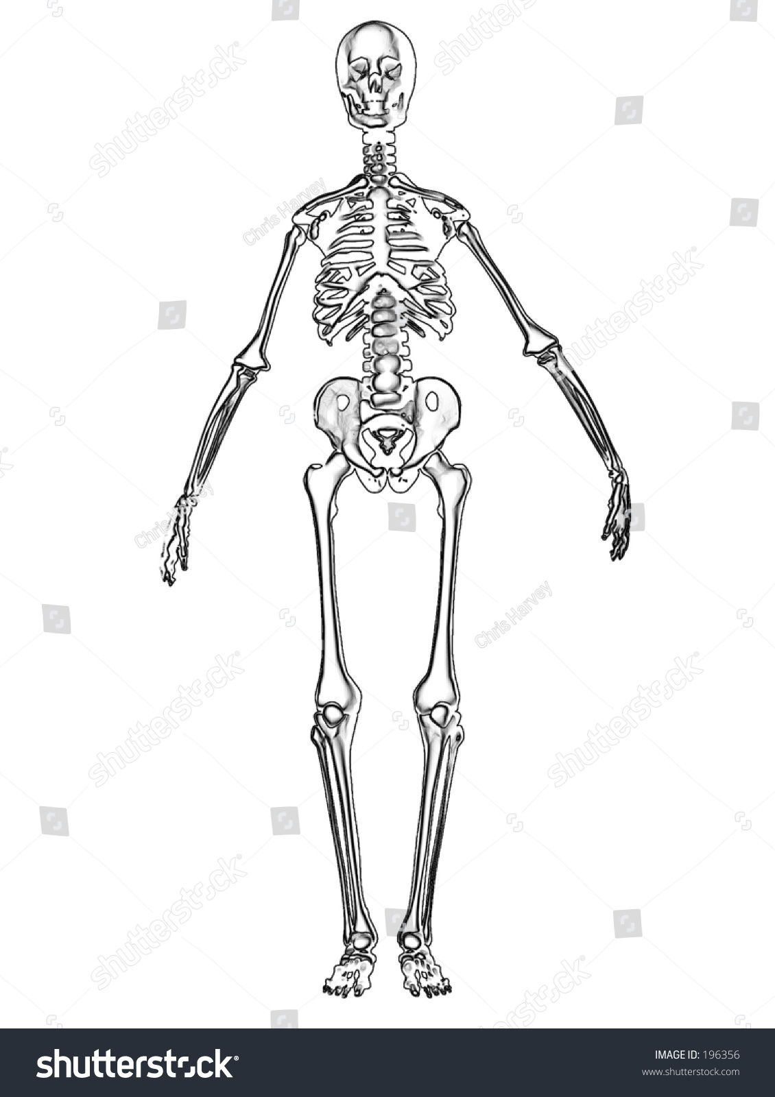 This Computer Generated Image Skeleton Stock Illustration Royalty