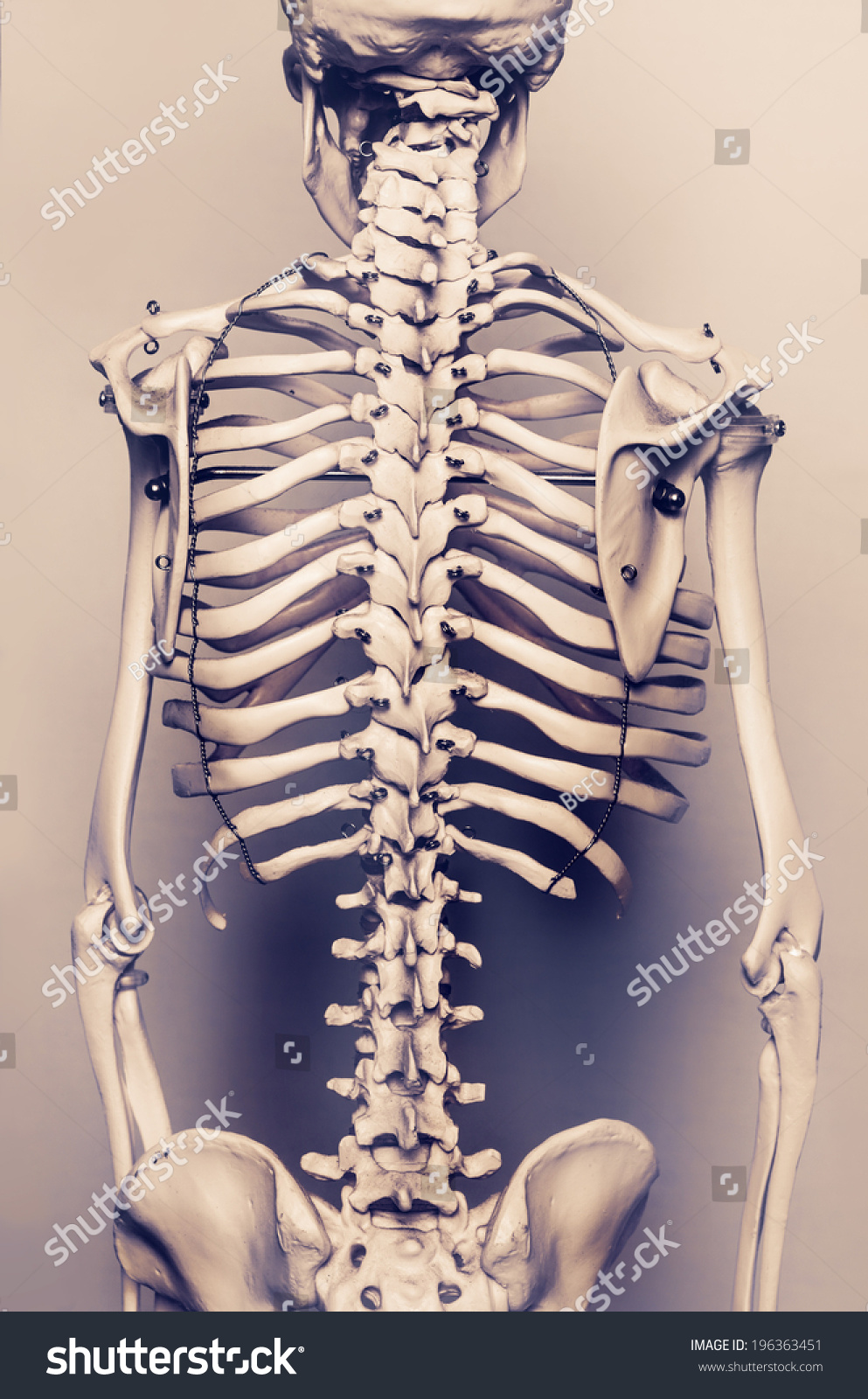 Stylized Background Photo Back Human Skeleton Stock Photo Edit Now