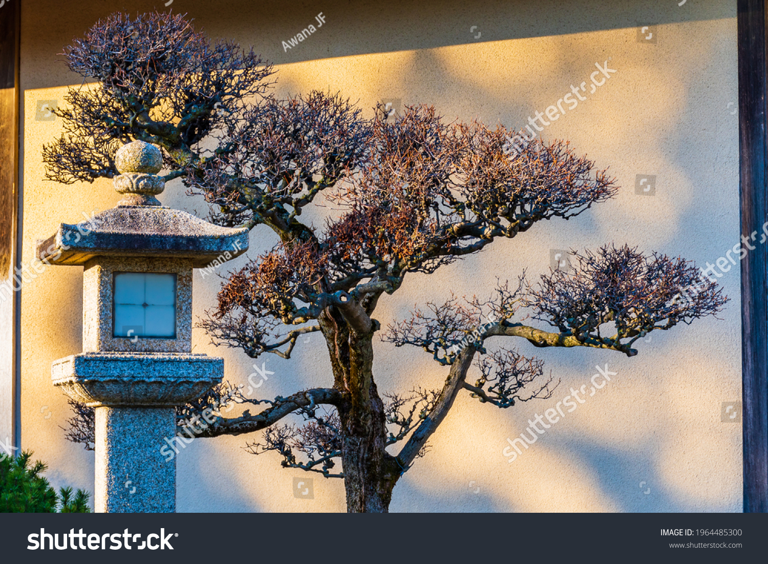 stock-photo-peaceful-view-of-a-tree-in-a