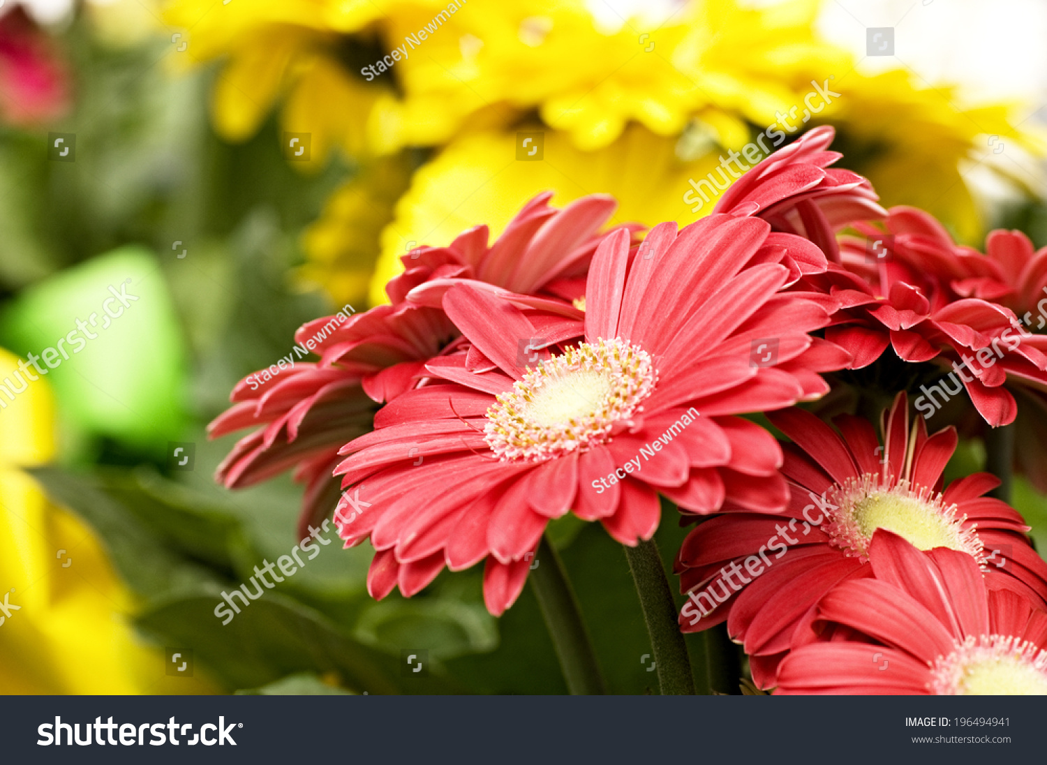 Red yellow flower arrangements green leaves stock photo royalty red and yellow flower arrangements with green leaves mightylinksfo