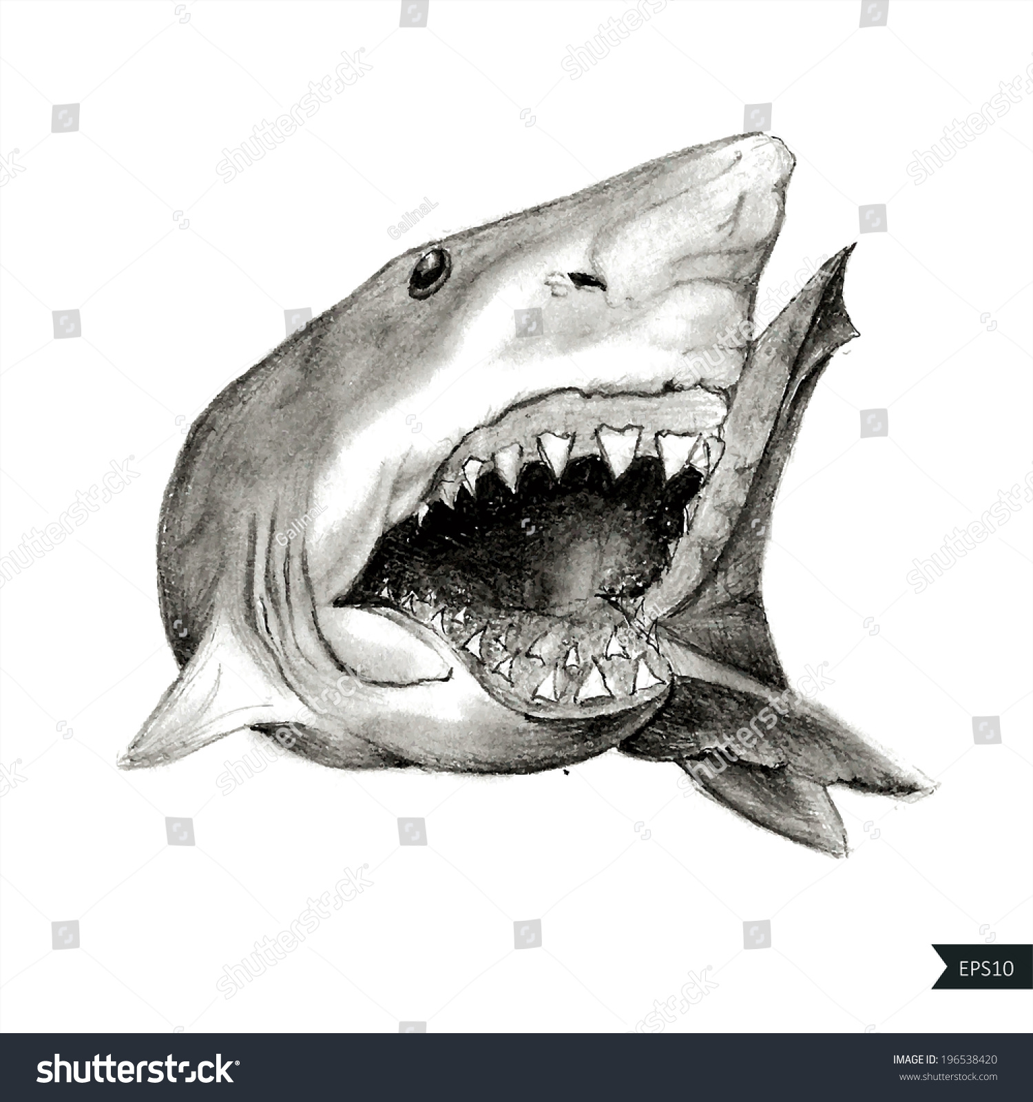 Painted Angry Shark Open Mouth Stock Vector (2018) 196538420 ... for shark drawing open mouth  35fsj