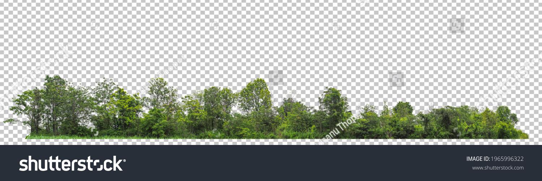 ้high resolution of forest on transparent picture background with clipping path for easy to selection  #1965996322