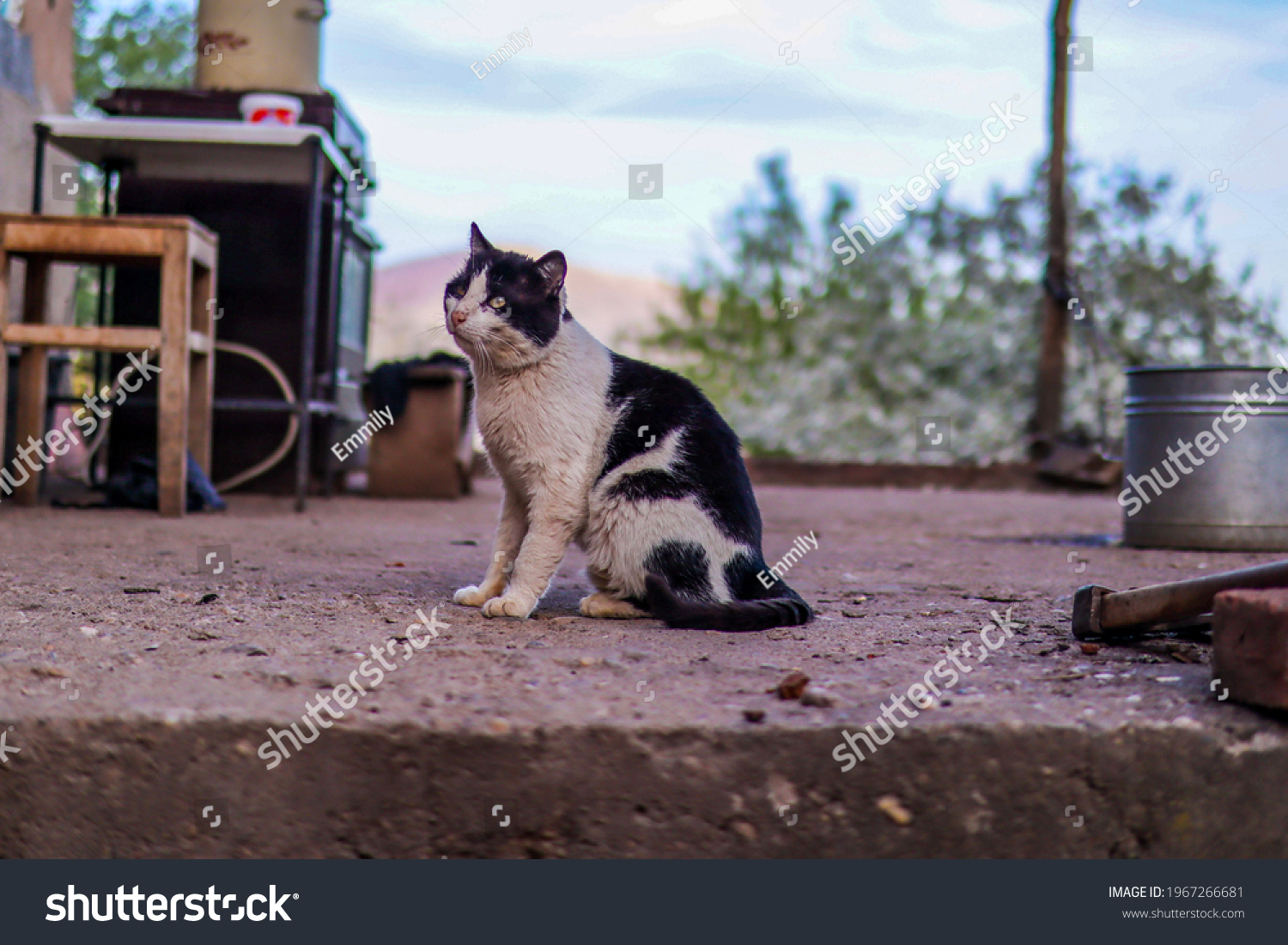 stock-photo-cute-old-black-and-white-cat