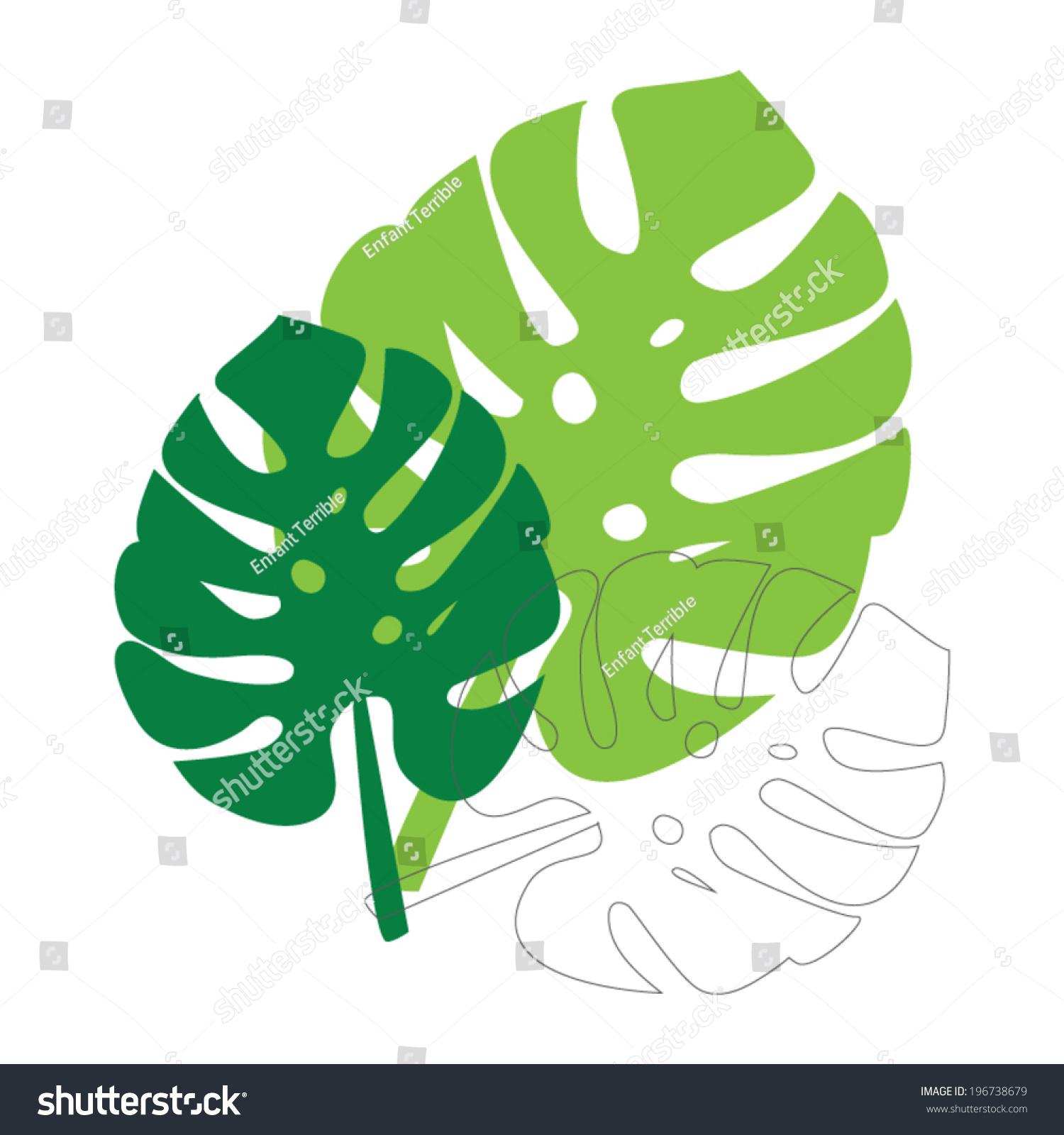 monstera leaves vector illustration leaf template stock vector