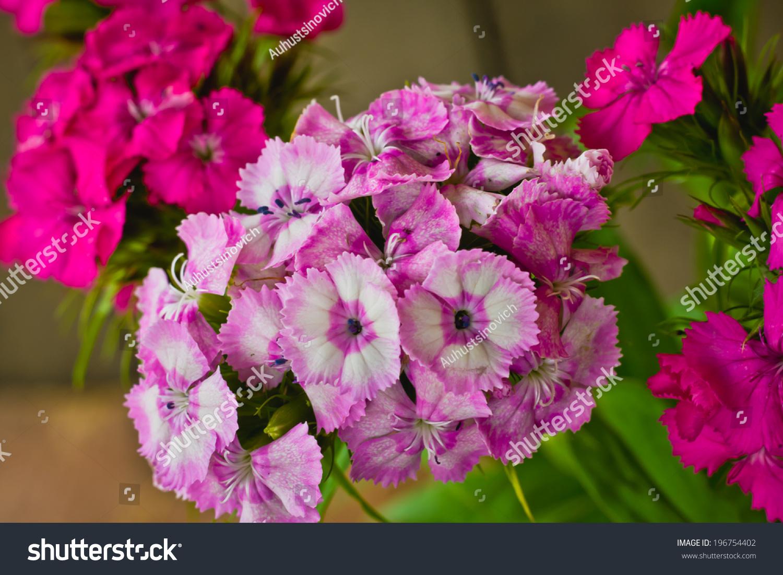 Beautiful flowers small carnations stock photo royalty free beautiful flowers small carnations izmirmasajfo
