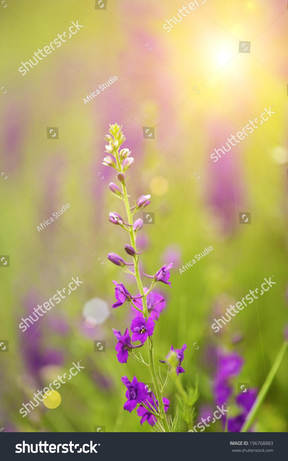 Beautiful Wild Flowers Outdoors Ez Canvas