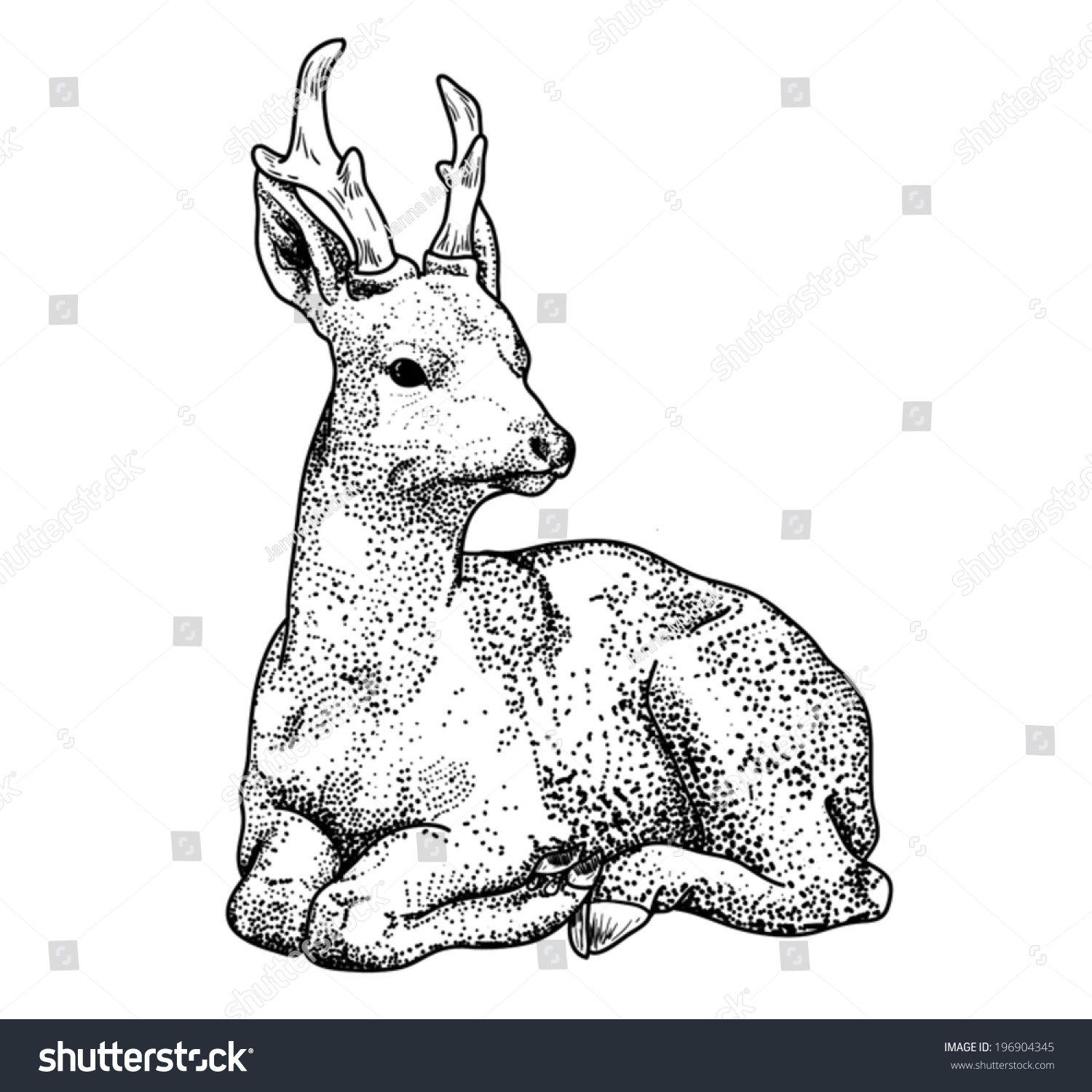 Deer Contour Line Drawing : Contour drawing deer points cartoon lay isolated on