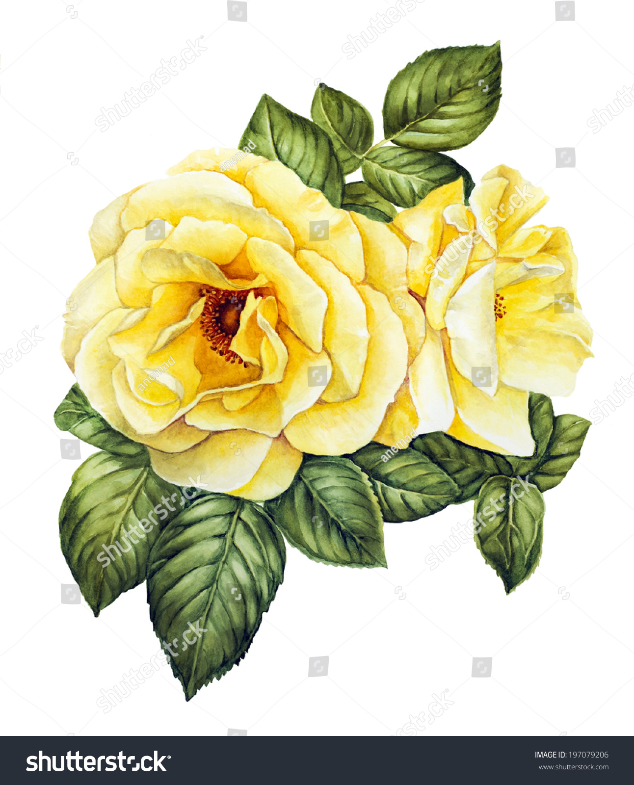 Yellow rose flower watercolor stock illustration 197079206 yellow rose flower watercolor dhlflorist Image collections